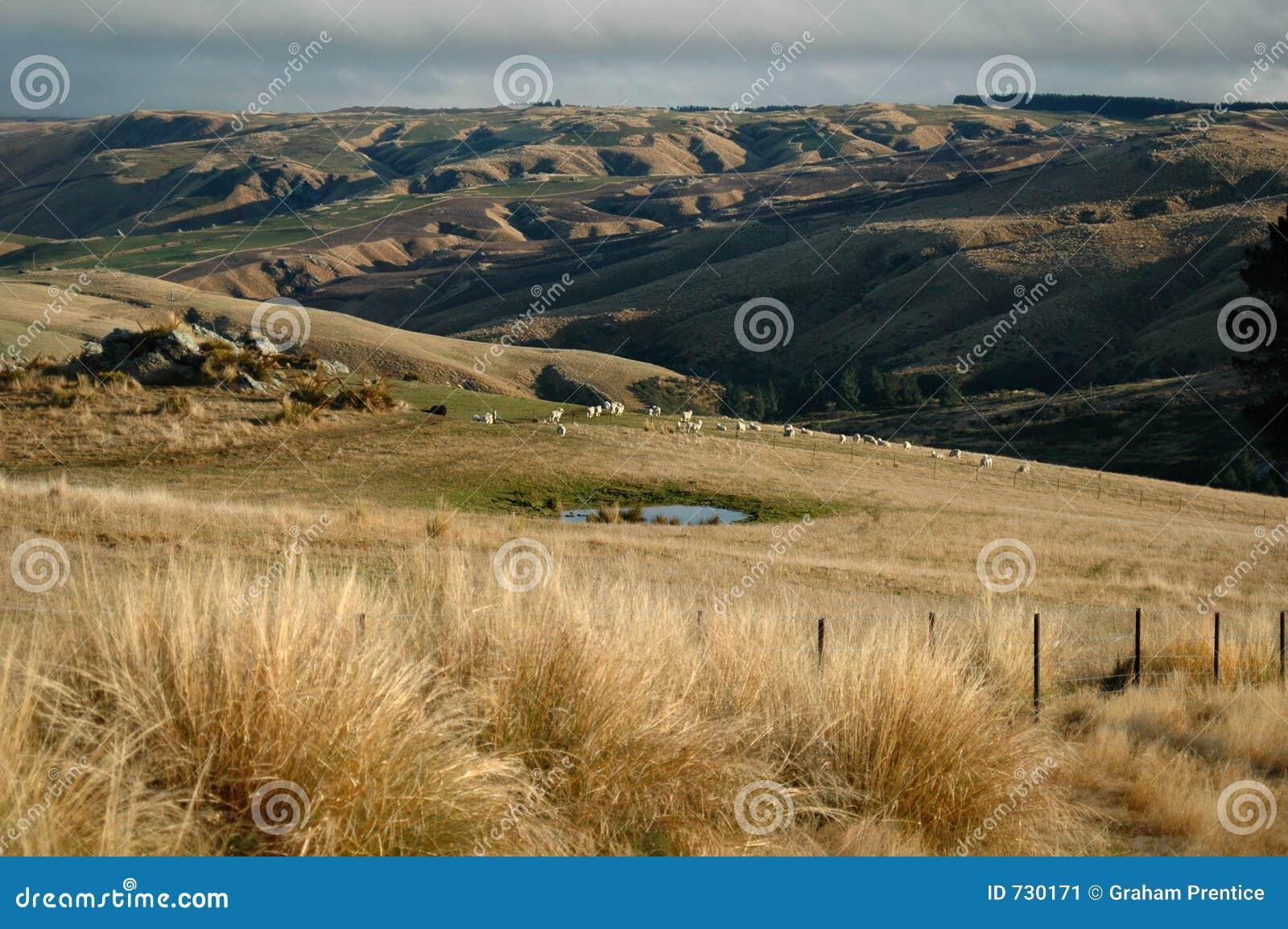 Ferme de moutons
