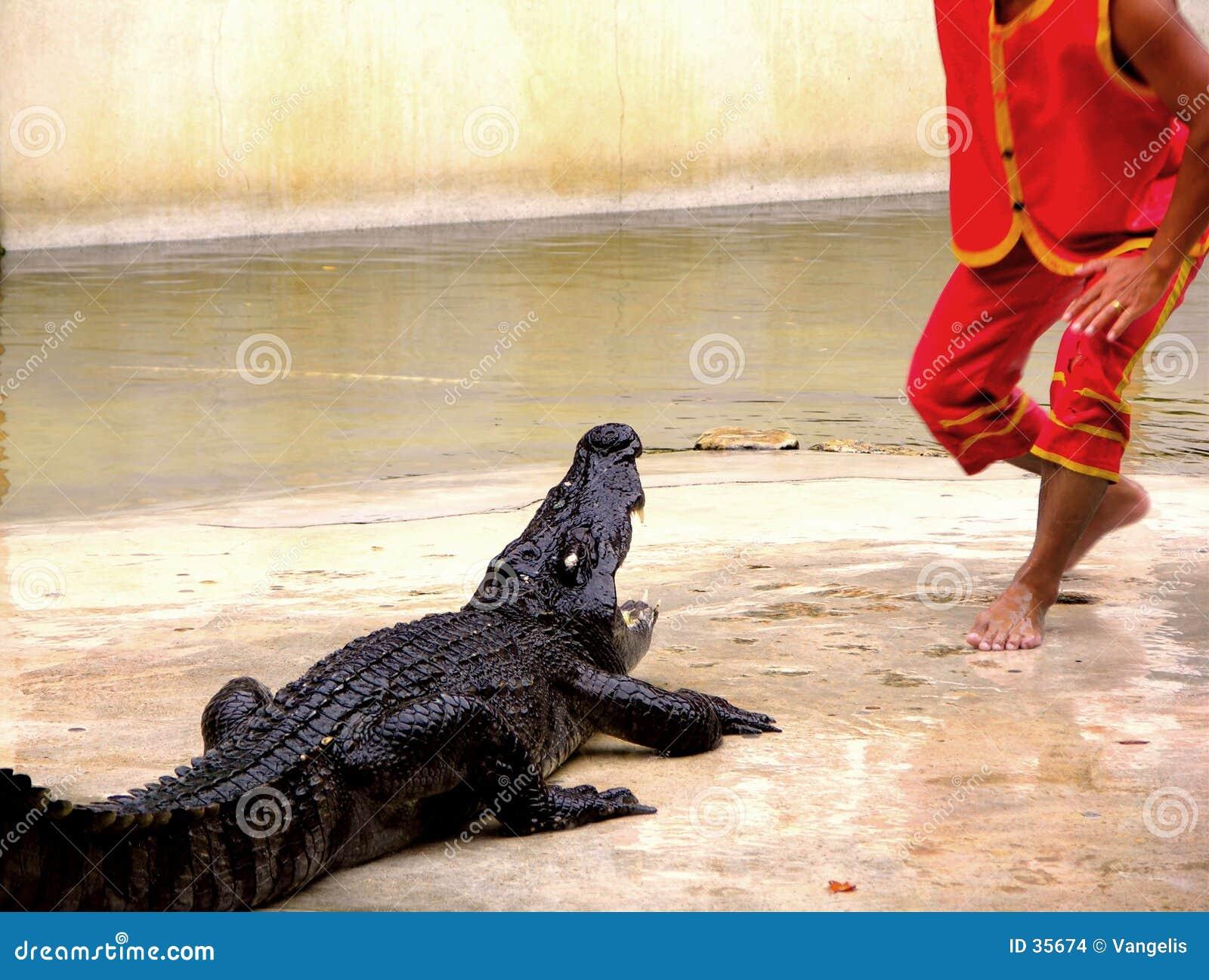 Ferme et zoo 1 de crocodile de Samutprakan