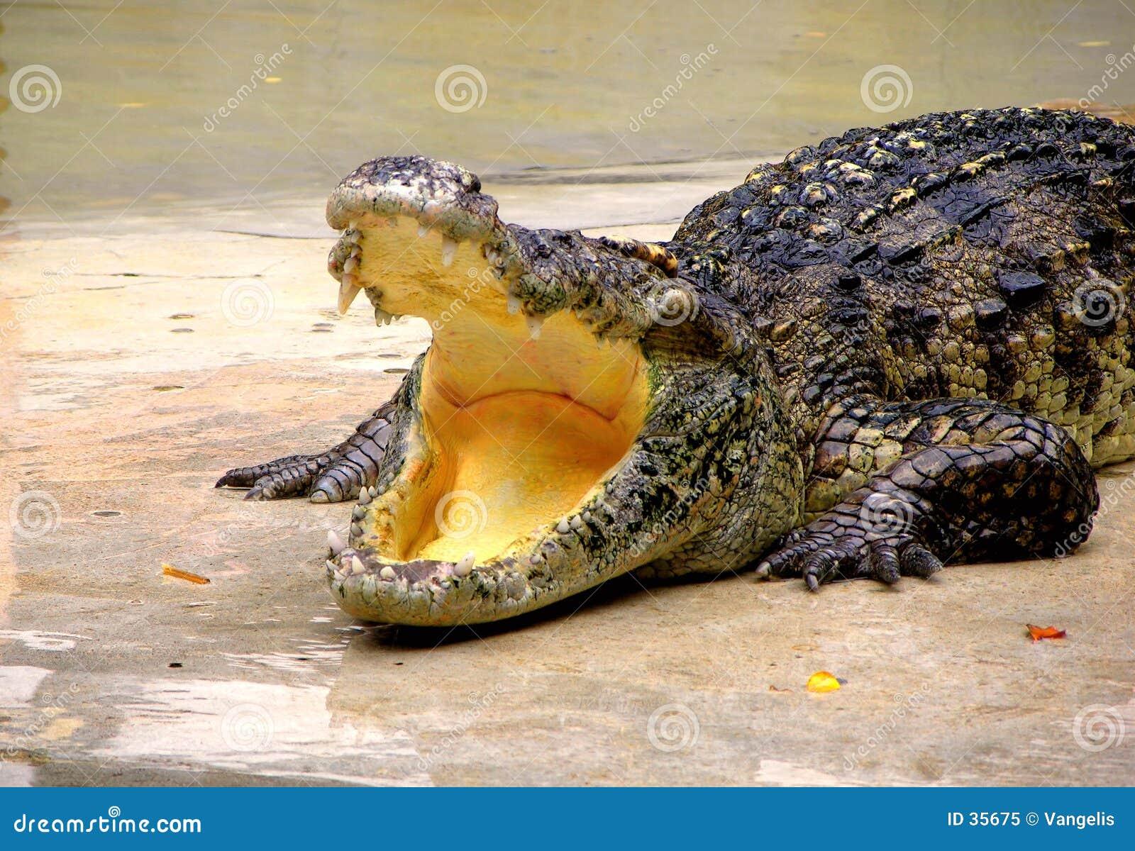 Ferme et zoo de crocodile de Samutprakan