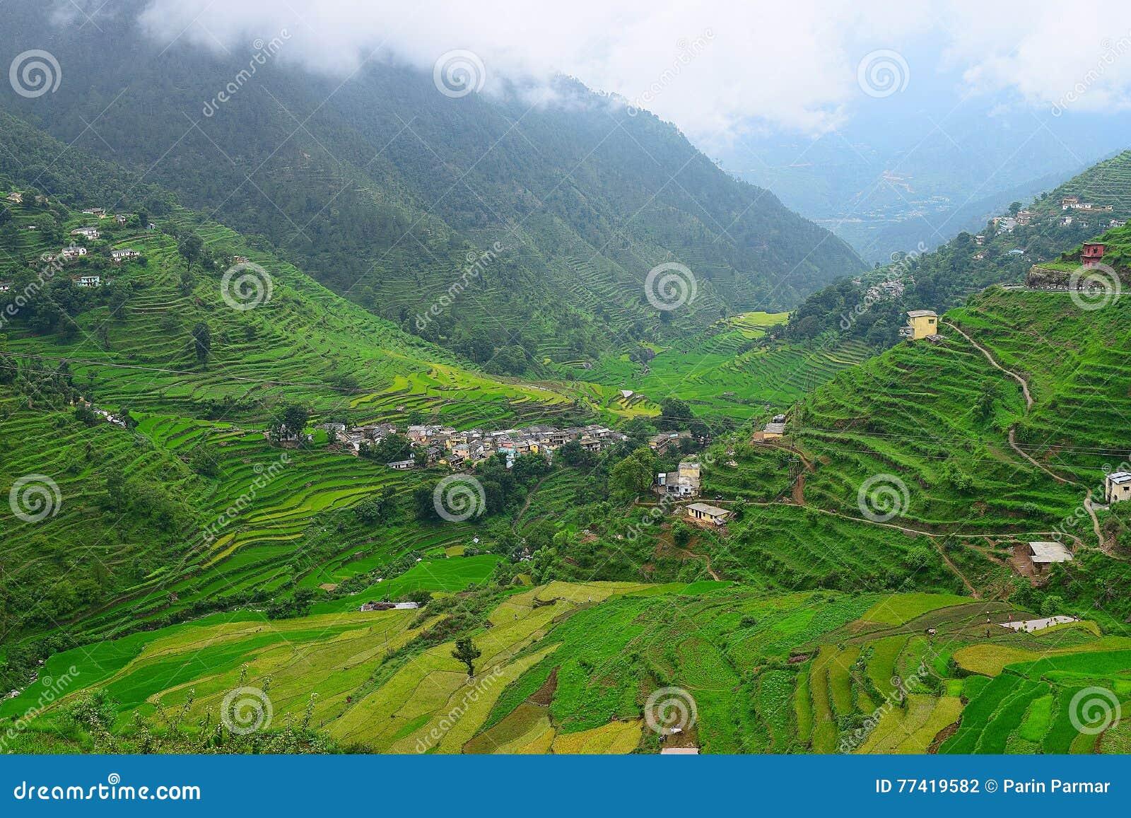 Fermes d étape en vallée de l Himalaya dans Uttarakhand, Inde