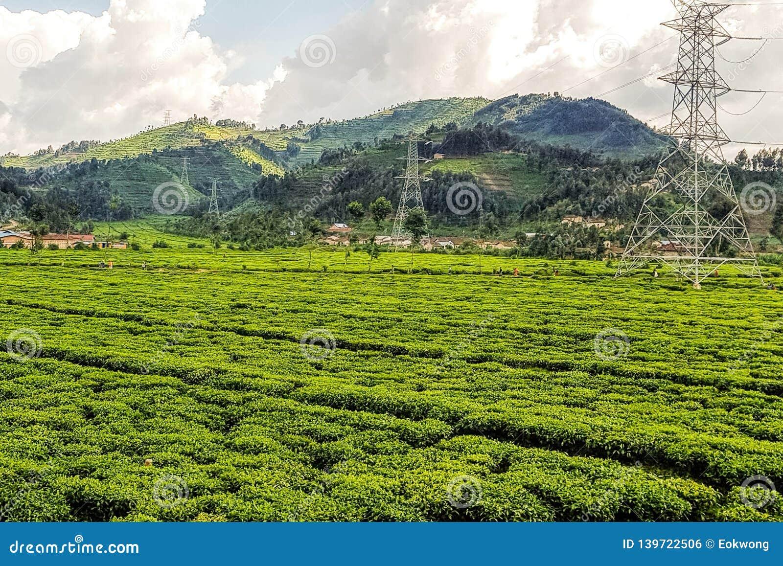 Fermes sur des flancs de coteau au Rwanda, Afrique de l Est