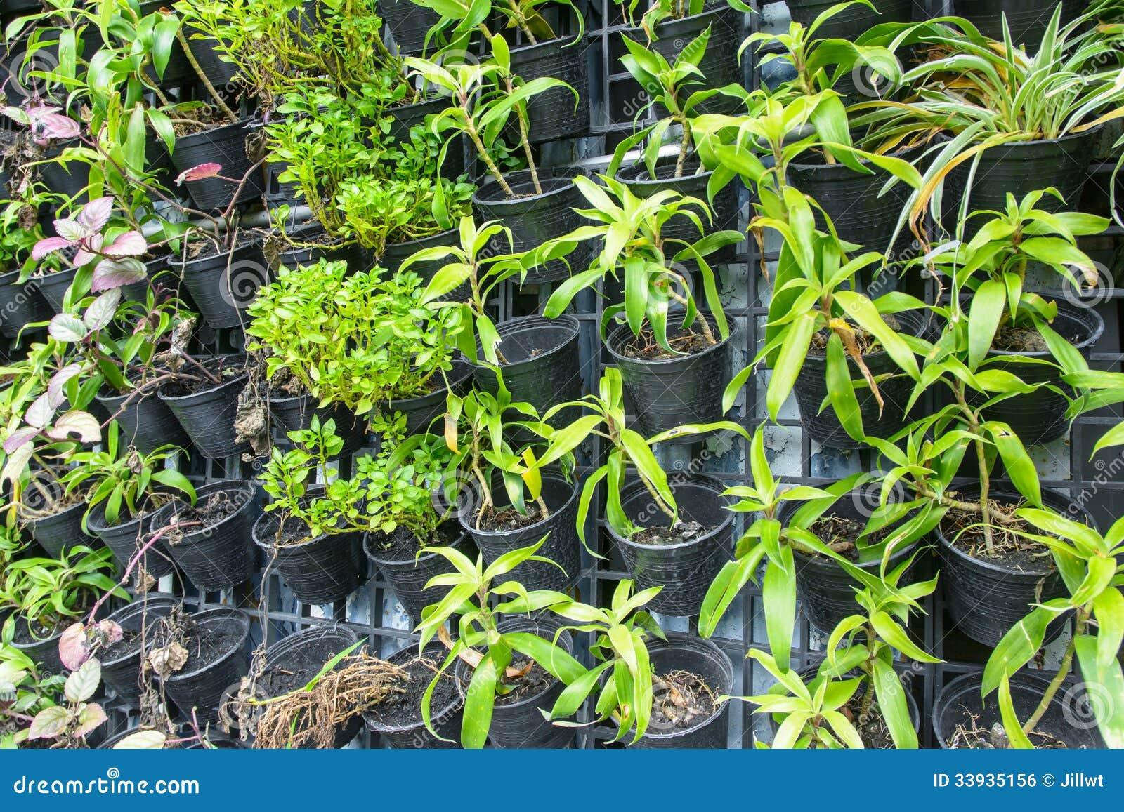 Fermez vers le haut des beaucoup la plante verte de ferme for Vers dans les plantes