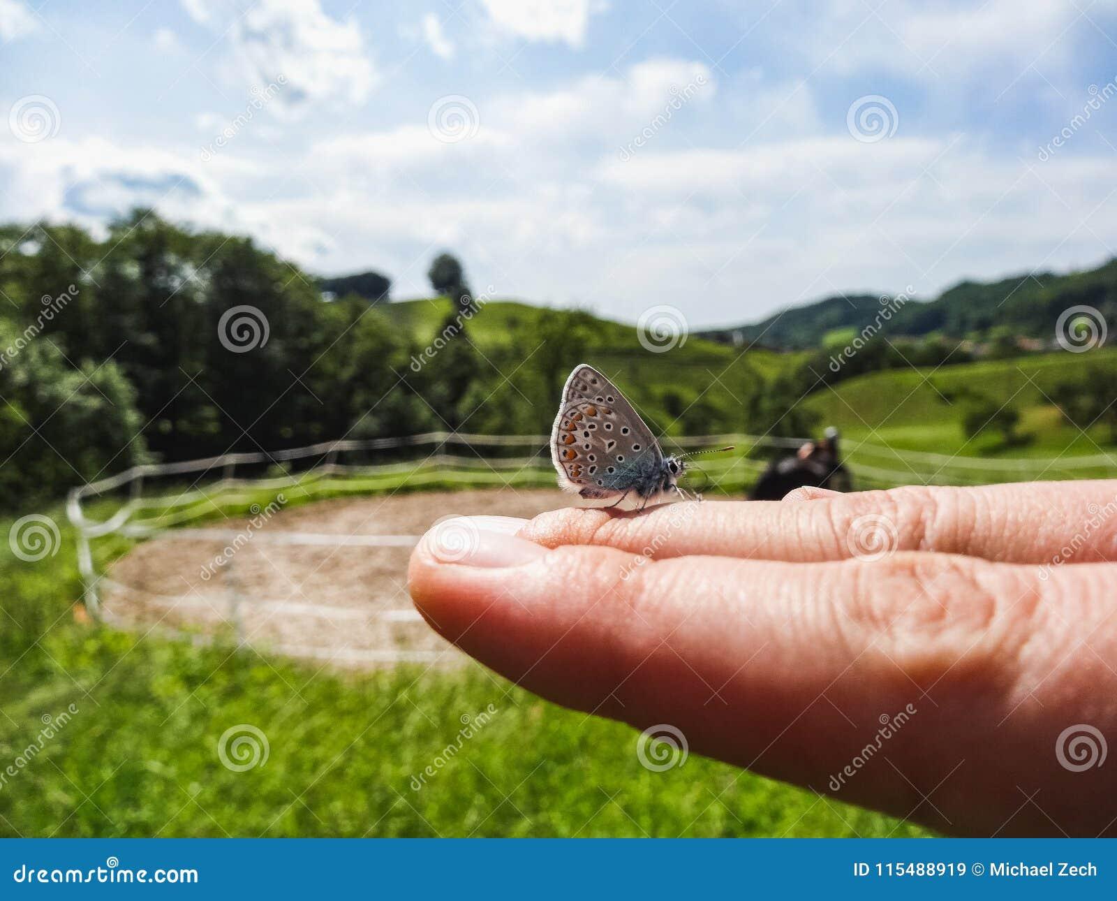 Fermez-vous d un petit papillon se reposant sur la main de la femme