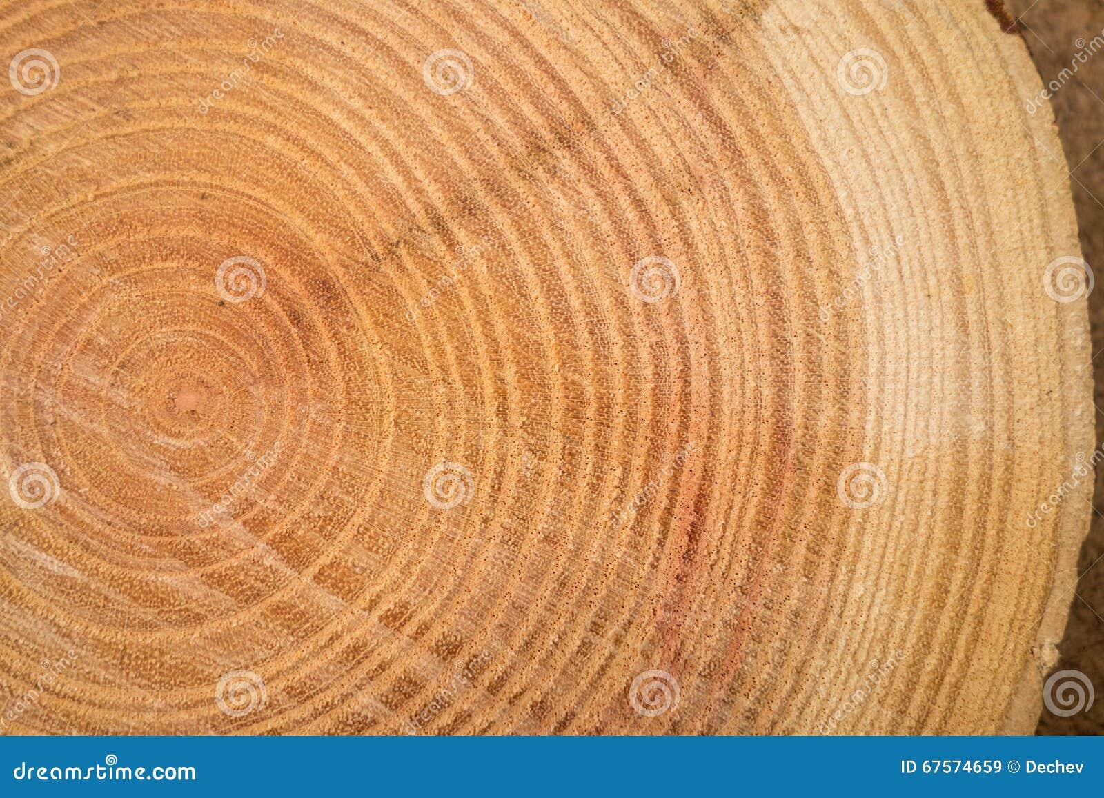 fermez vous de la texture en bois du tronc d 39 arbre coup image stock image du lumber boucle. Black Bedroom Furniture Sets. Home Design Ideas