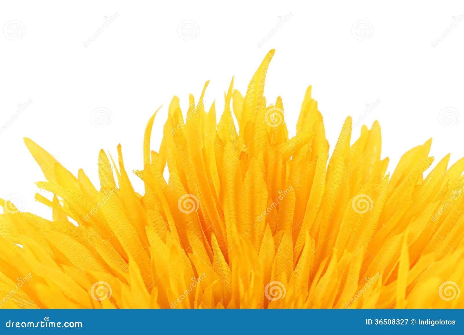Fermez-vous des pétales jaunes de fleur.