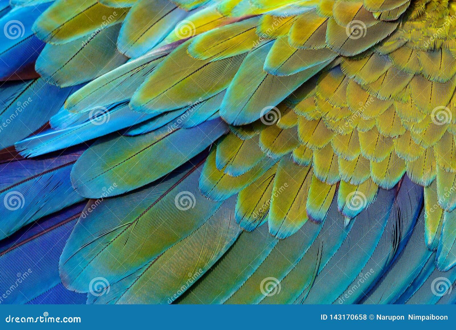 Fermez-vous des plumes d oiseau d ara de Catalina