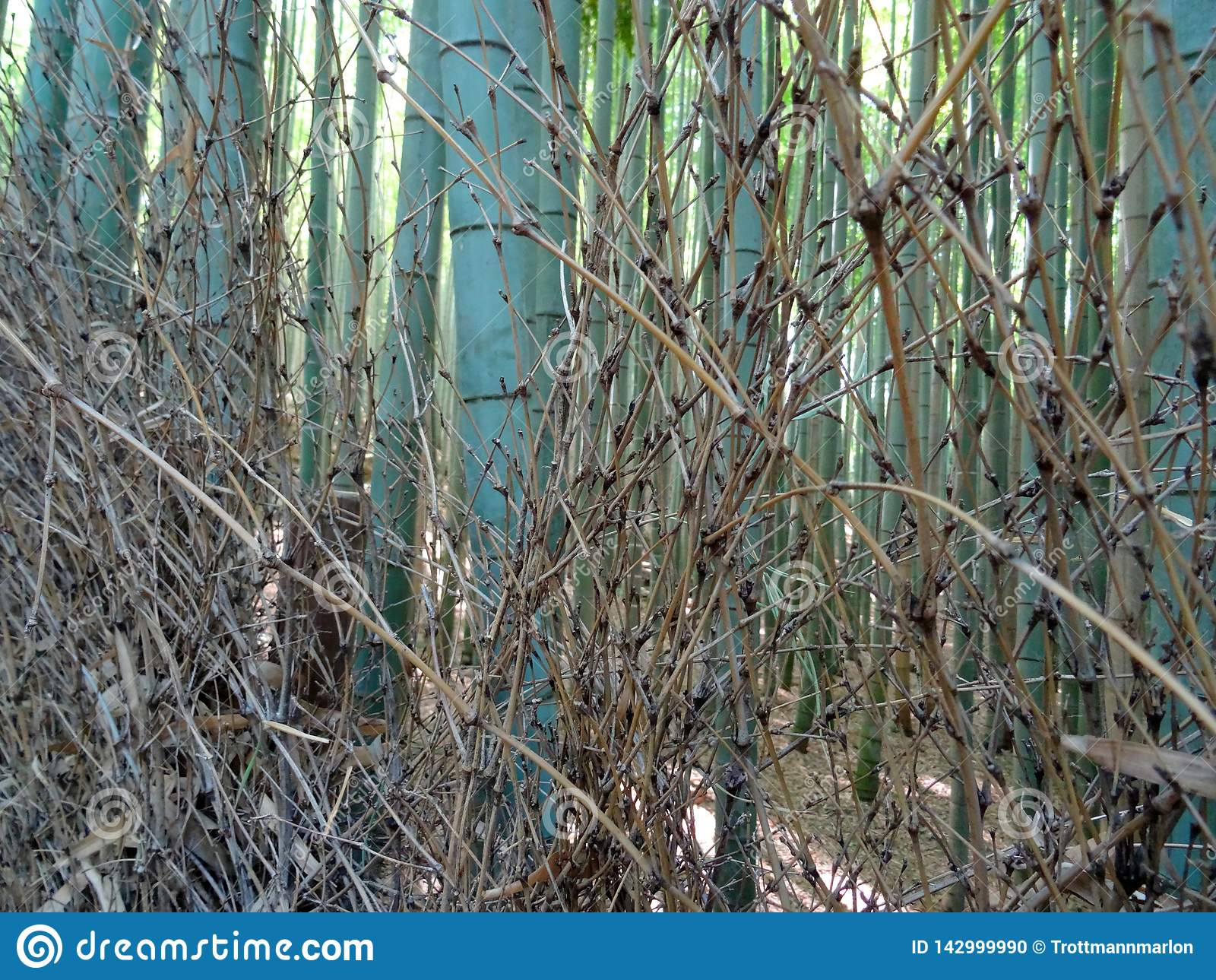 Fermez-vous des troncs en bambou à la forêt en bambou d Arashiyama