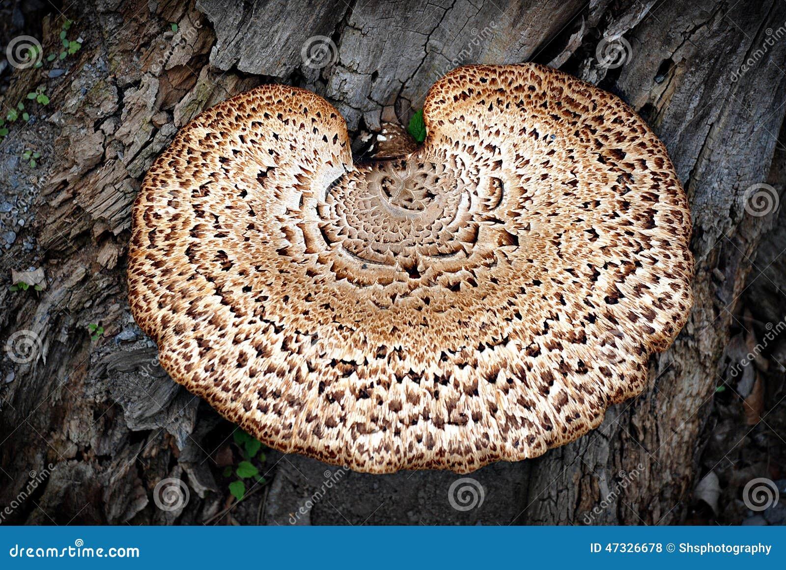 Fermez vous du champignon de parenth se sur le tronc d 39 arbre photo stock image 47326678 - Champignon sur tronc d arbre ...
