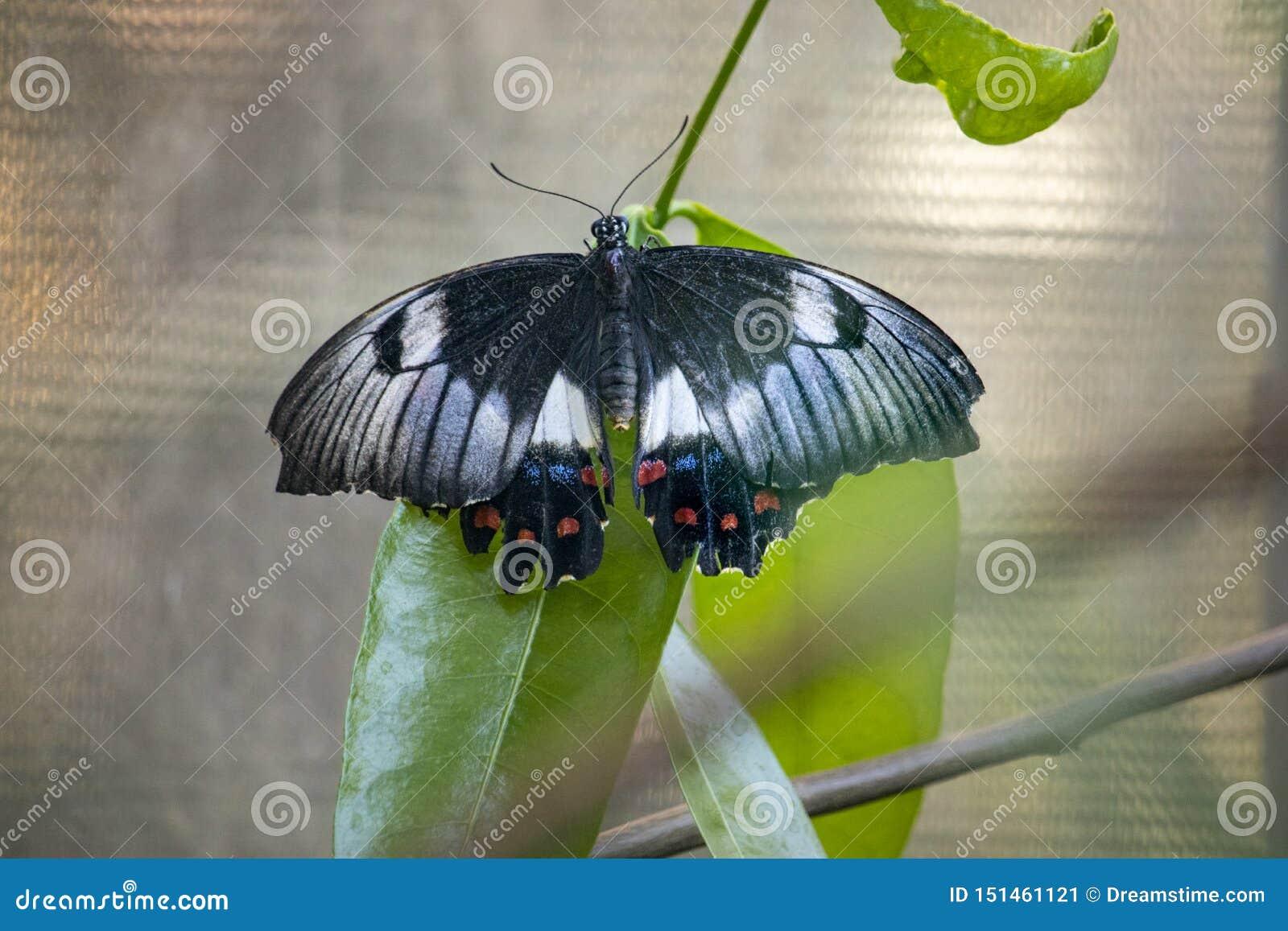 Fermez-vous du papillon sur une feuille