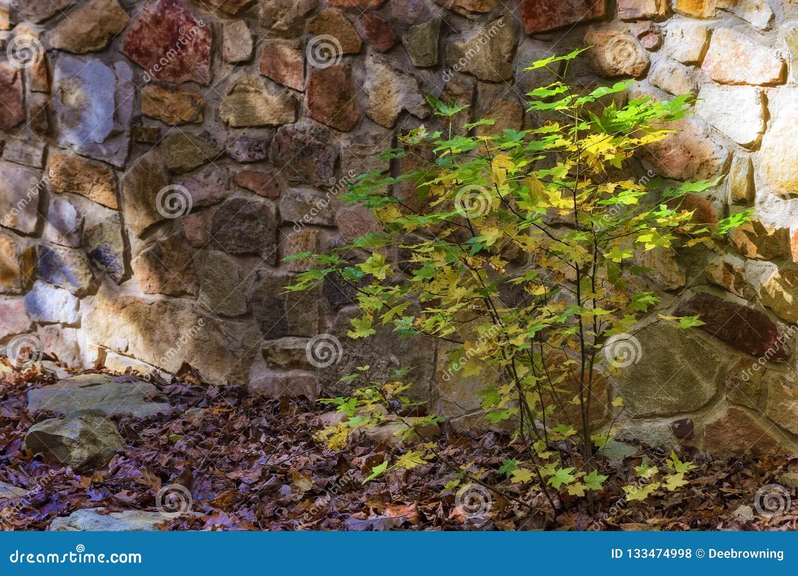 Fermez-vous du petit buisson contre un mur de roche