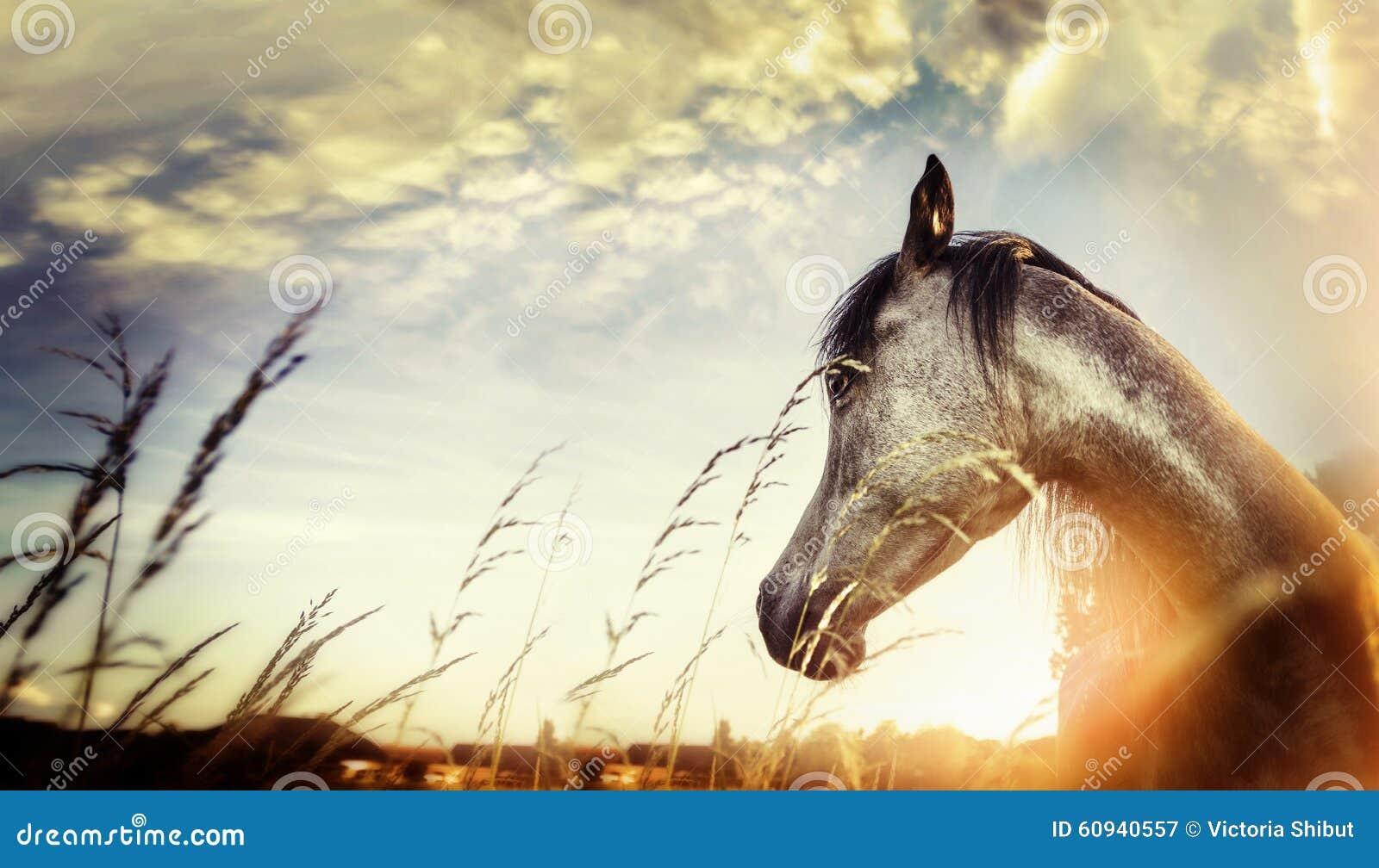 Fermez-vous du portrait de cheval au-dessus du fond de crépuscule de nature de coucher du soleil