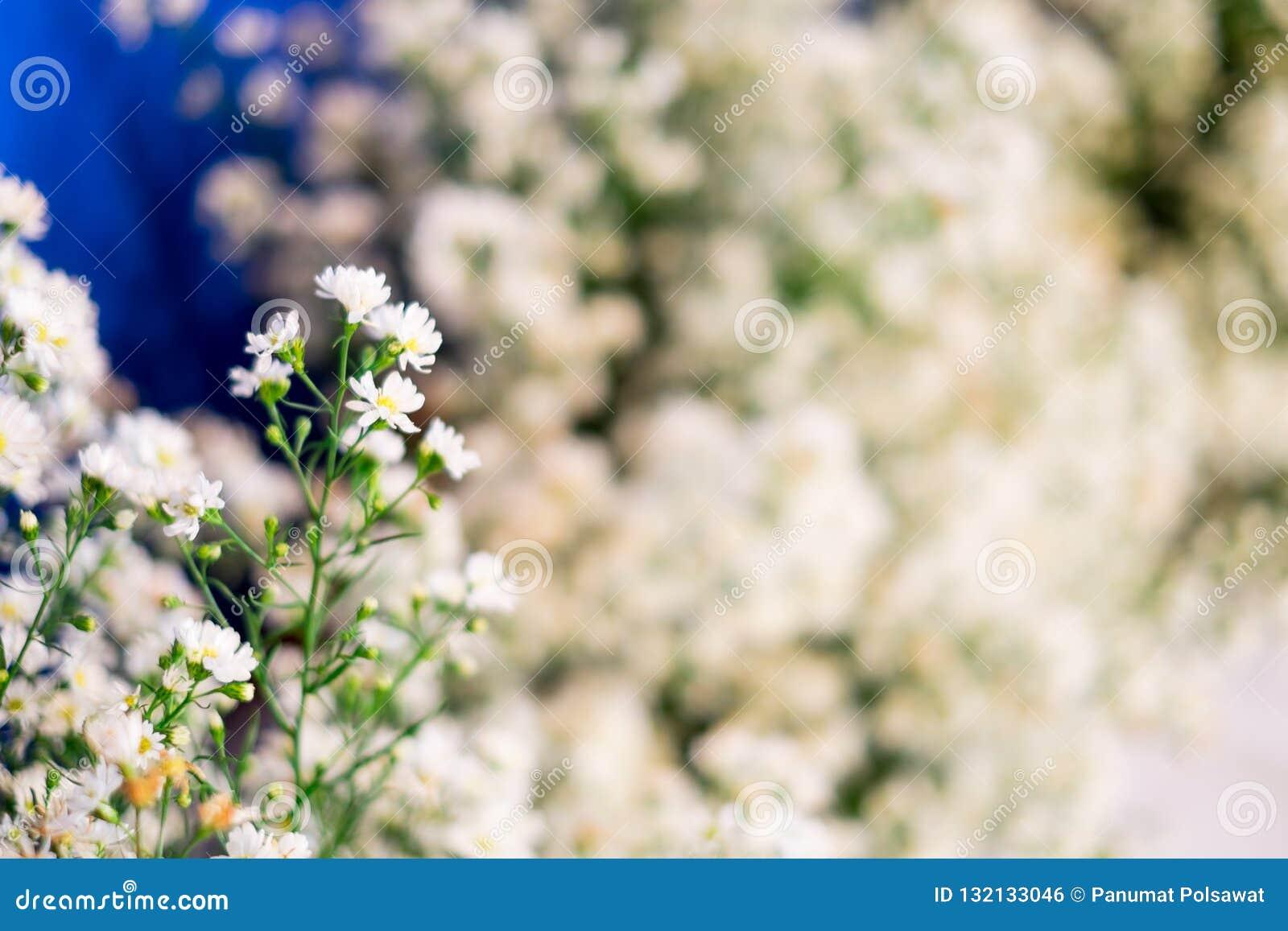 Fermez-vous vers le haut d une petits fleur blanche et sélectif focalisés