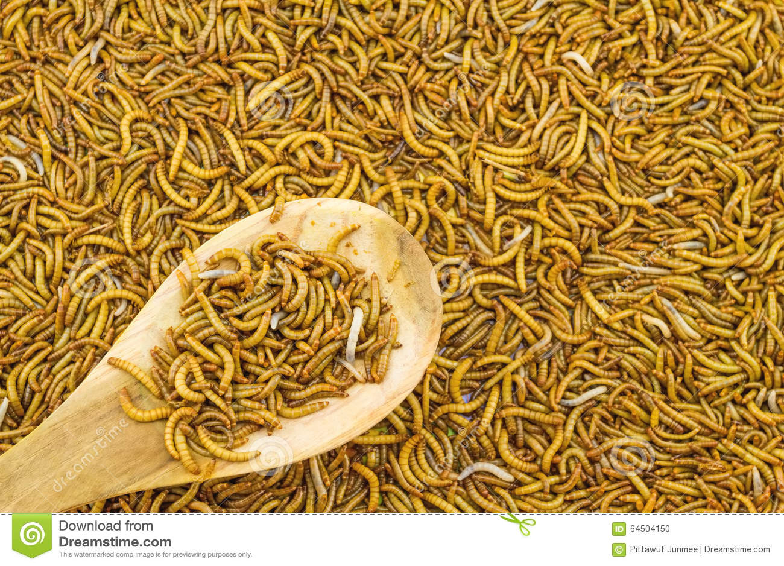 Fermez vous vers le haut de l 39 alimentation de ver de - Vers dans les cerises dangereux ...