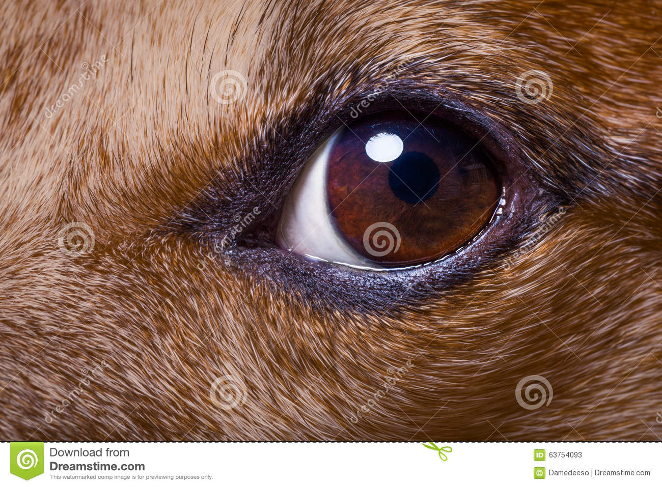 Iris Of Dogs Eyes