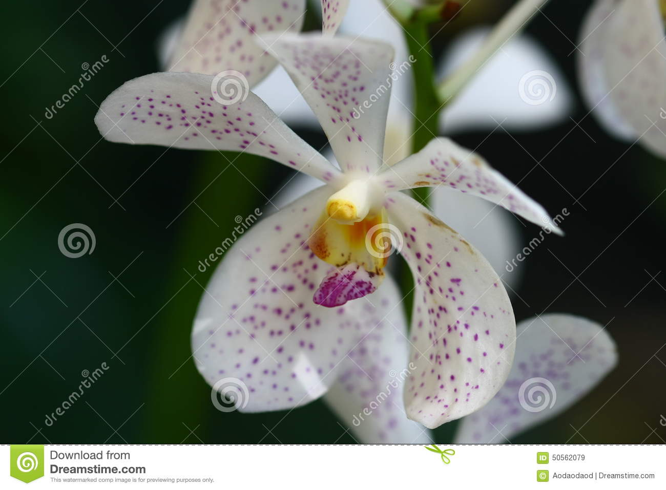 Emejing Orchidee De Jardin Tricyrtis Photos - Amazing House Design ...