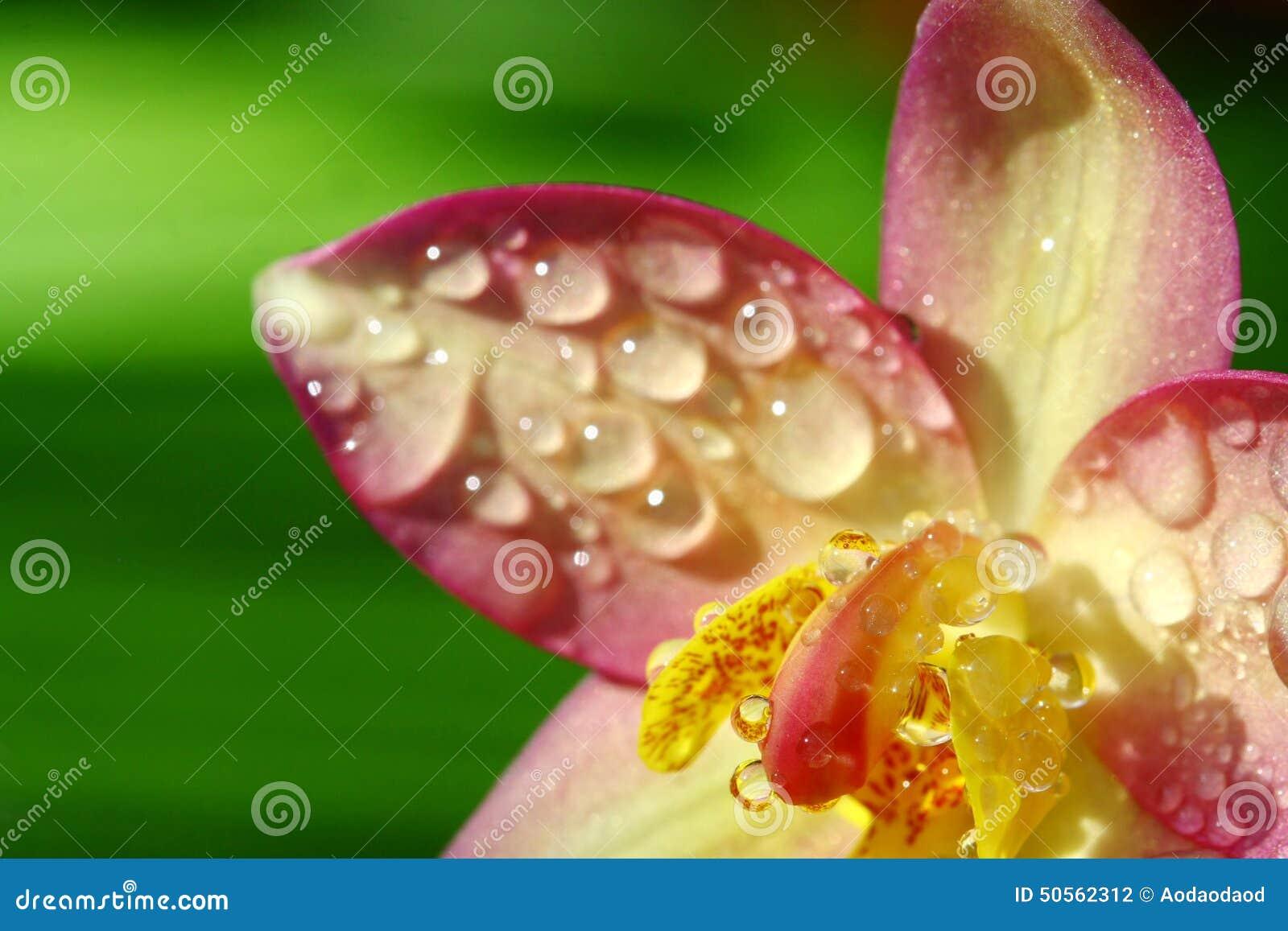 Fermez-vous Vers Le Haut De L\'orchidée Dans Le Jardin, Fleur Colorée ...