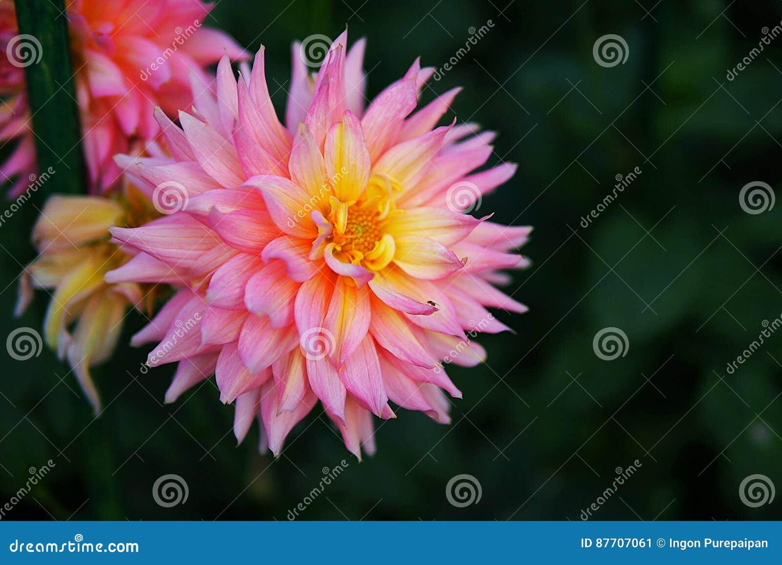 Fermez-vous vers le haut de la fleur rouge avec les feuilles vertes