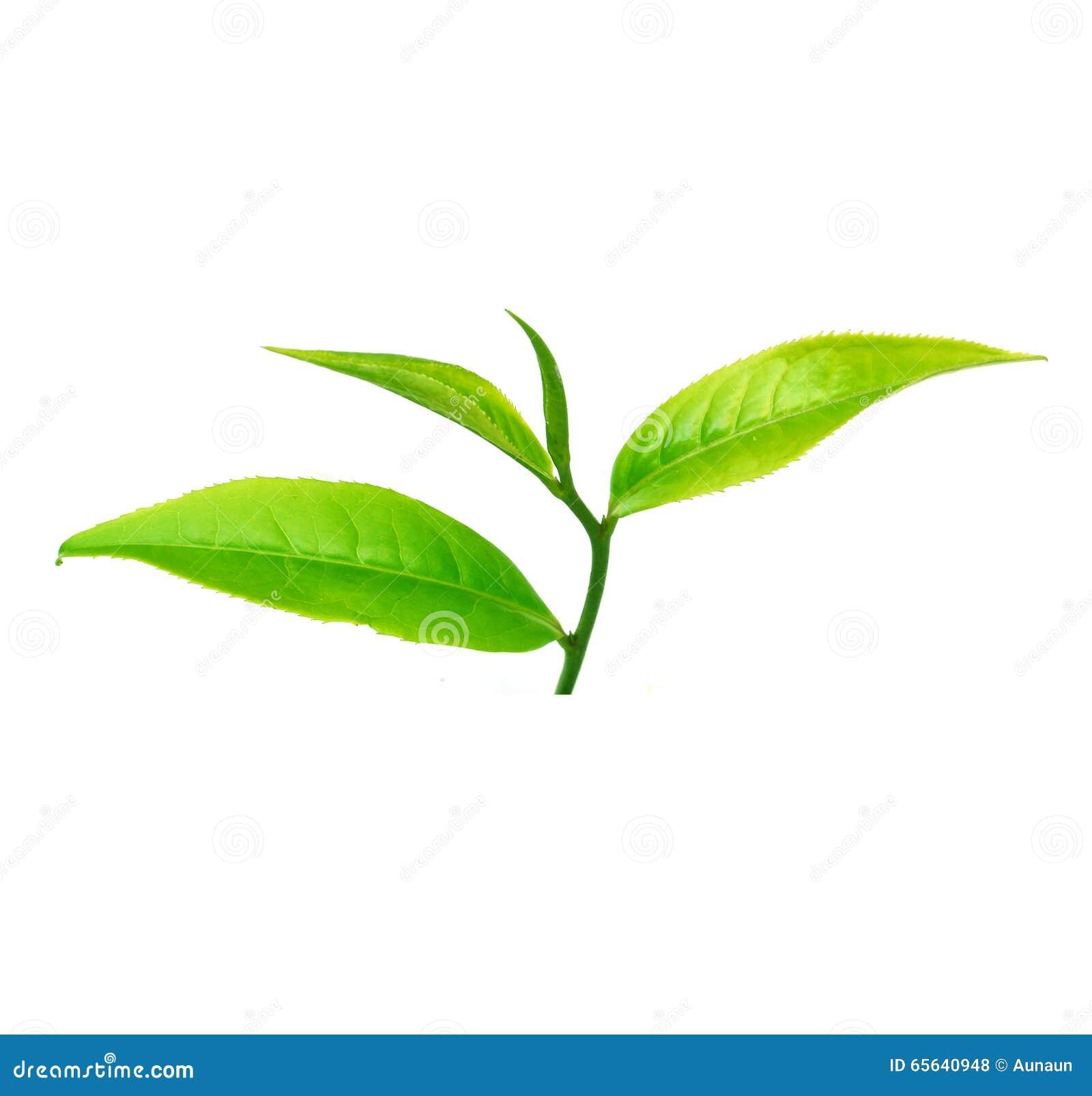 Fermez-vous vers le haut des feuilles de thé d isolement sur le fond blanc