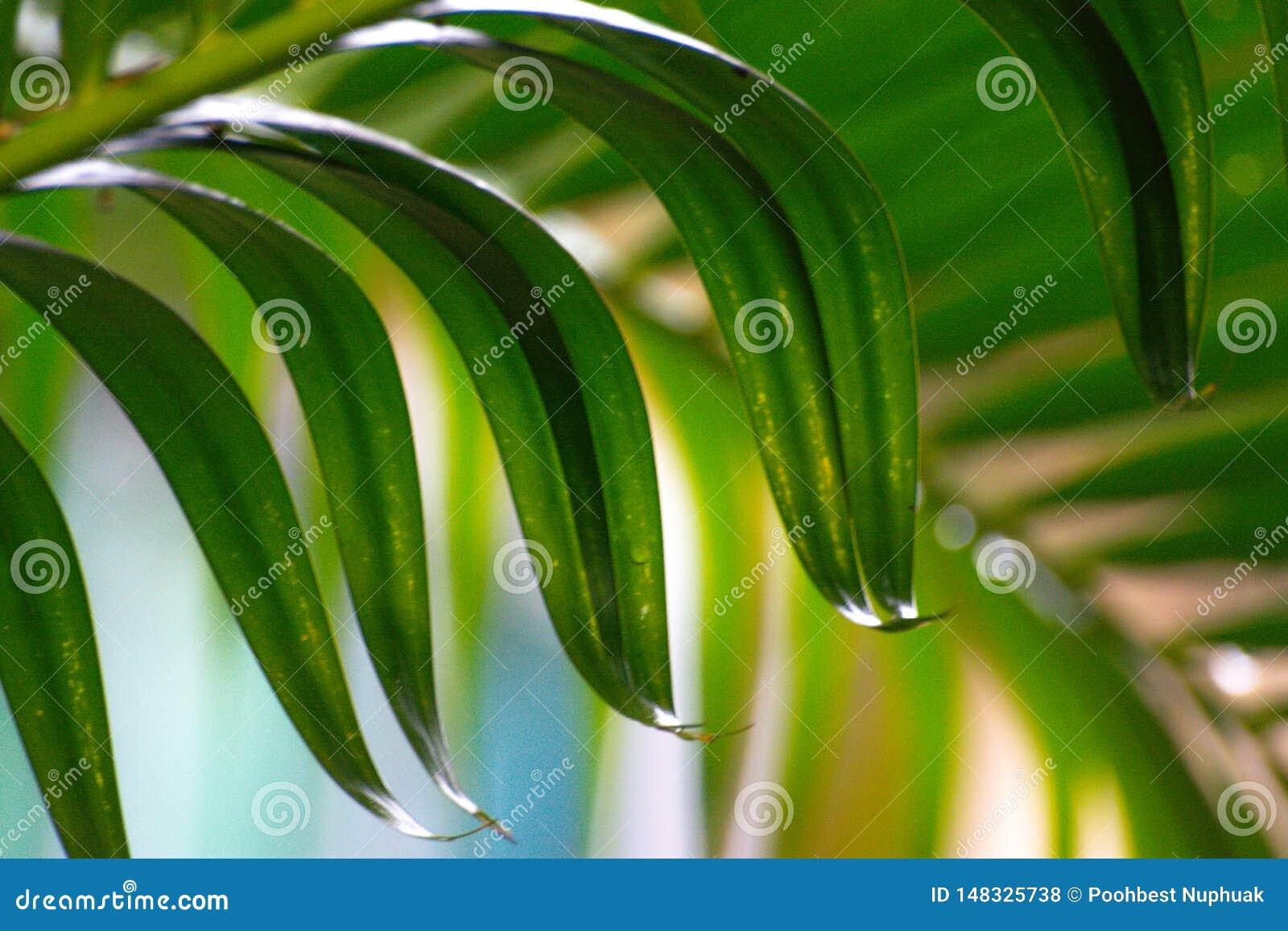 Fermez-vous vers le haut des feuilles des palmiers
