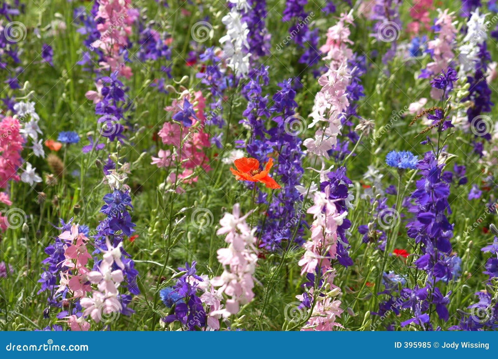 Fermez-vous vers le haut des Wildflowers