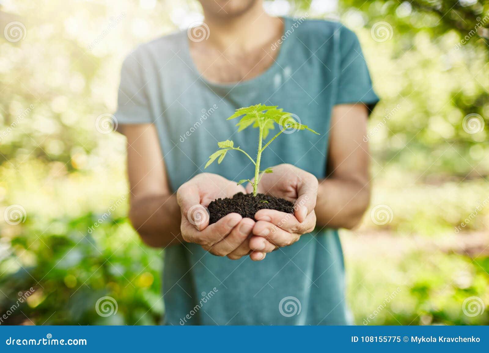 Fermez-vous vers le haut du tir de l homme à la peau foncée dans le T-shirt bleu tenant l usine avec les feuilles vertes dans des