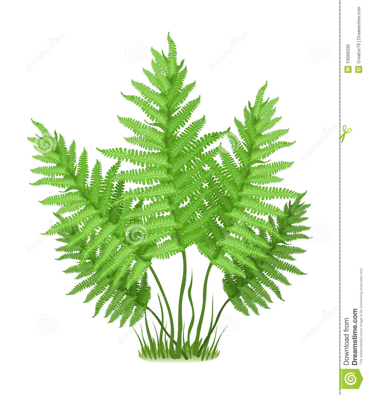 fern royalty free stock images image 10066039 tropical foliage clipart Picnic Clip Art