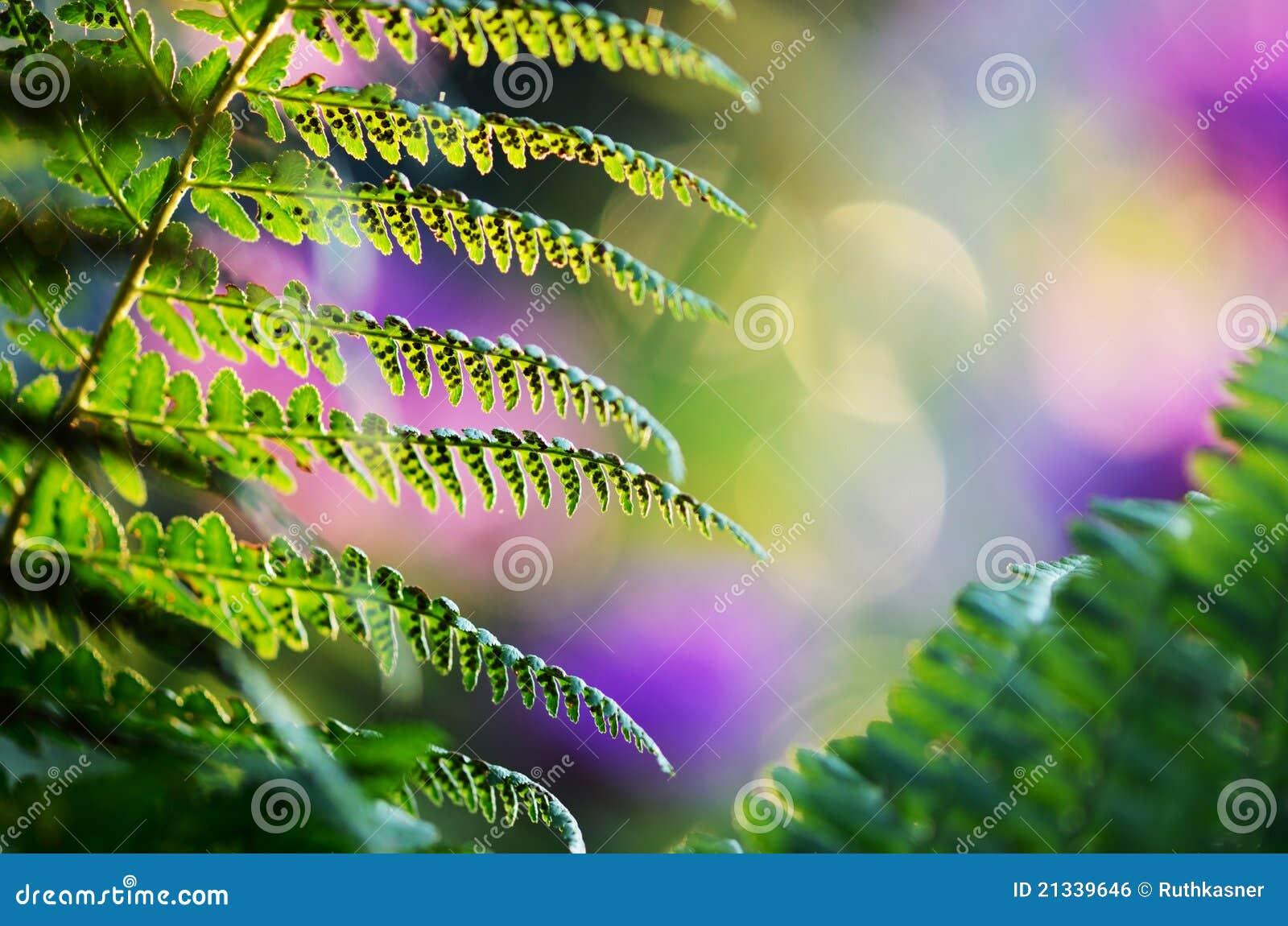 fern the green fairy pdf
