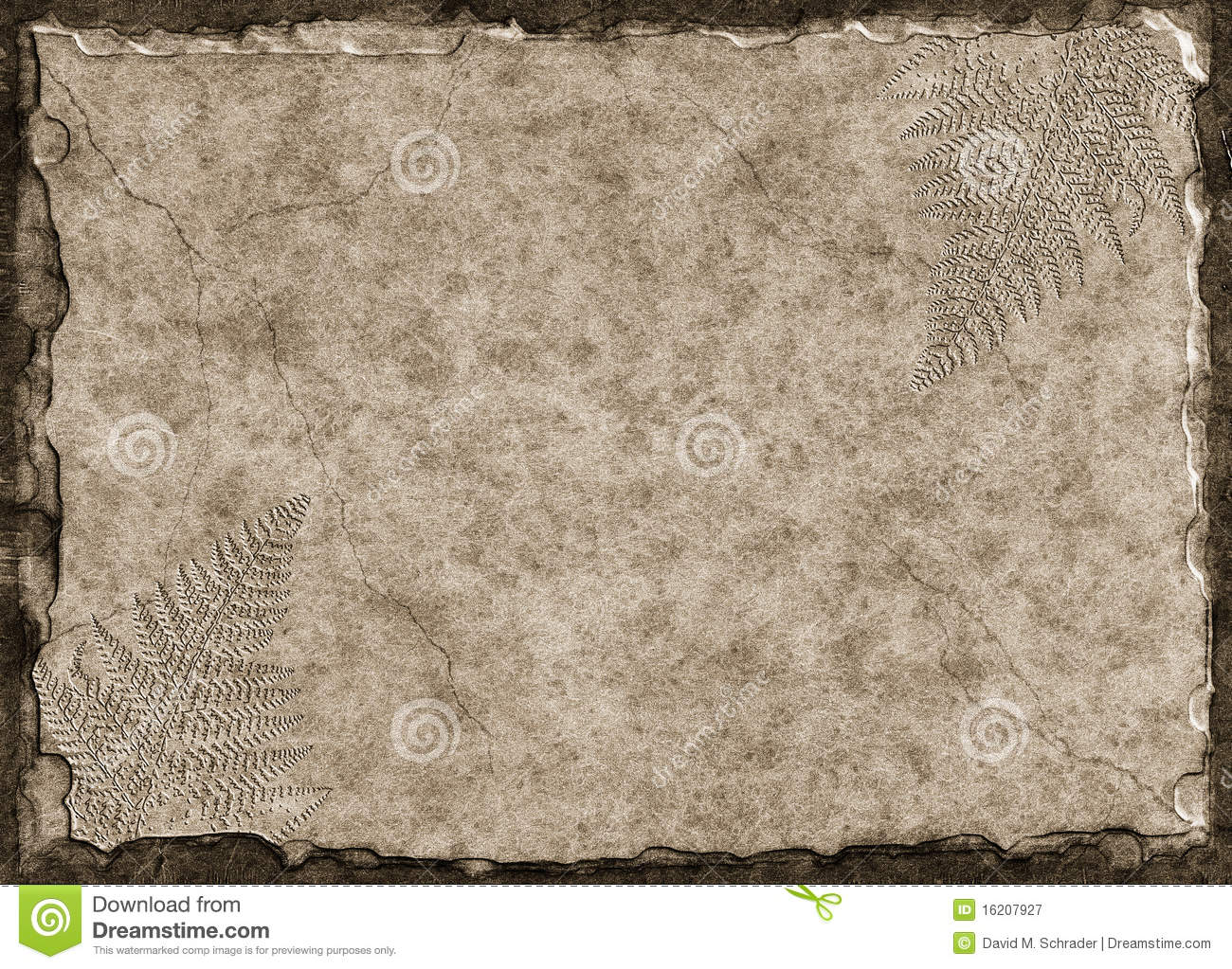 Stone Tablet Clip Art : Fern fossils royalty free stock photography image