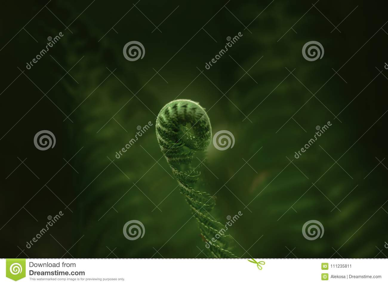 Fern green leaf in the forest. Close-up of green leaves. Low key