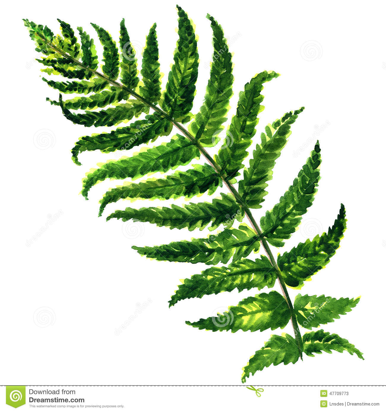fern isolated on white background stock illustration Picnic Clip Art BBQ Picnic Clip Art