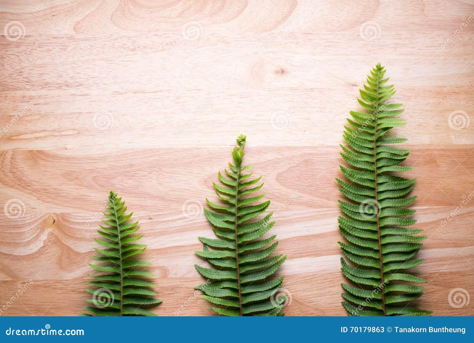 Fern isolerad leaf