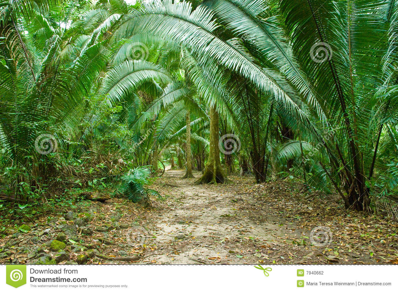 Gigantic fern plants along a jungle path to the mayan ruins of el ...