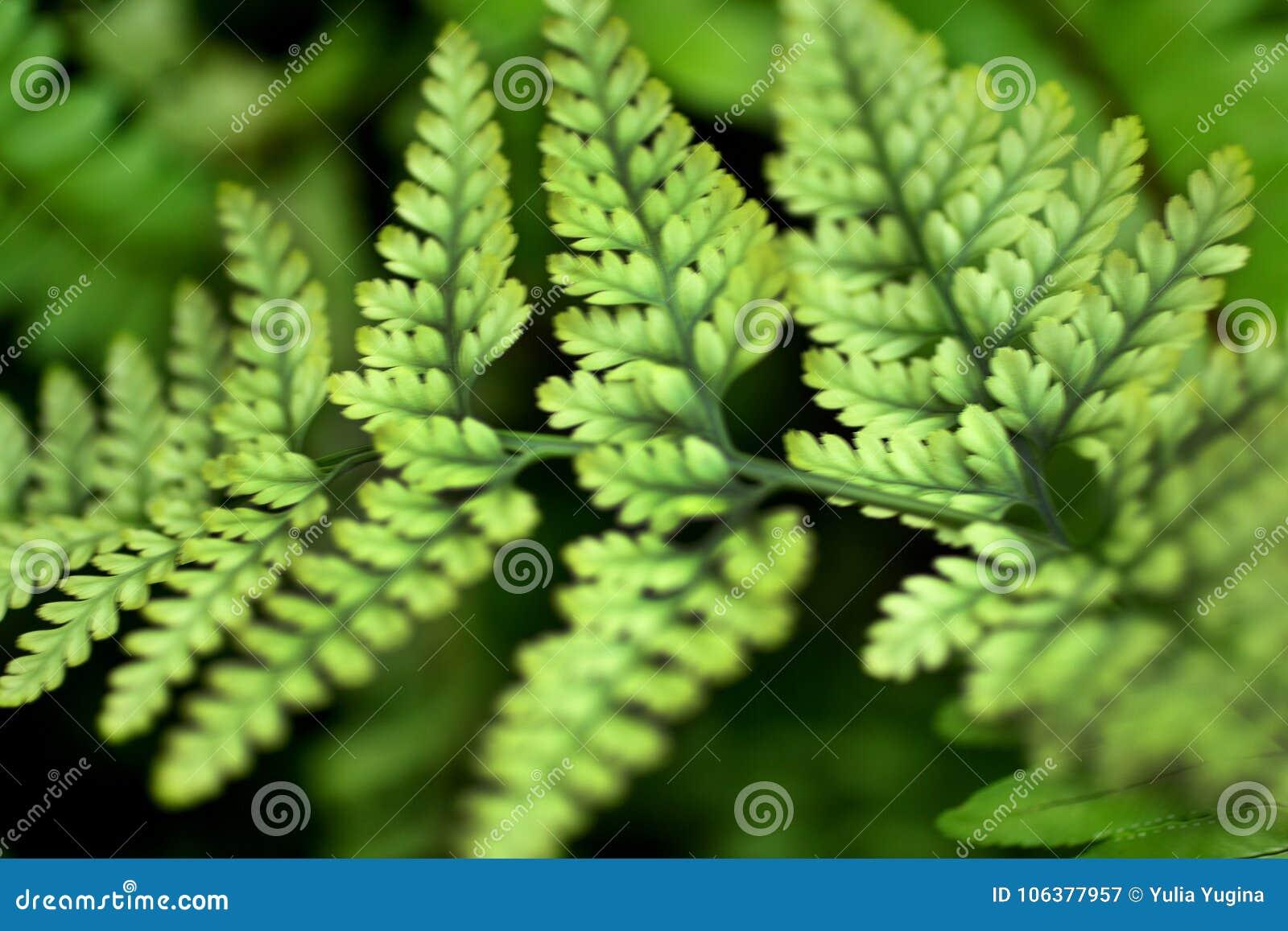 Fern leaf close-up on herbal bright background.