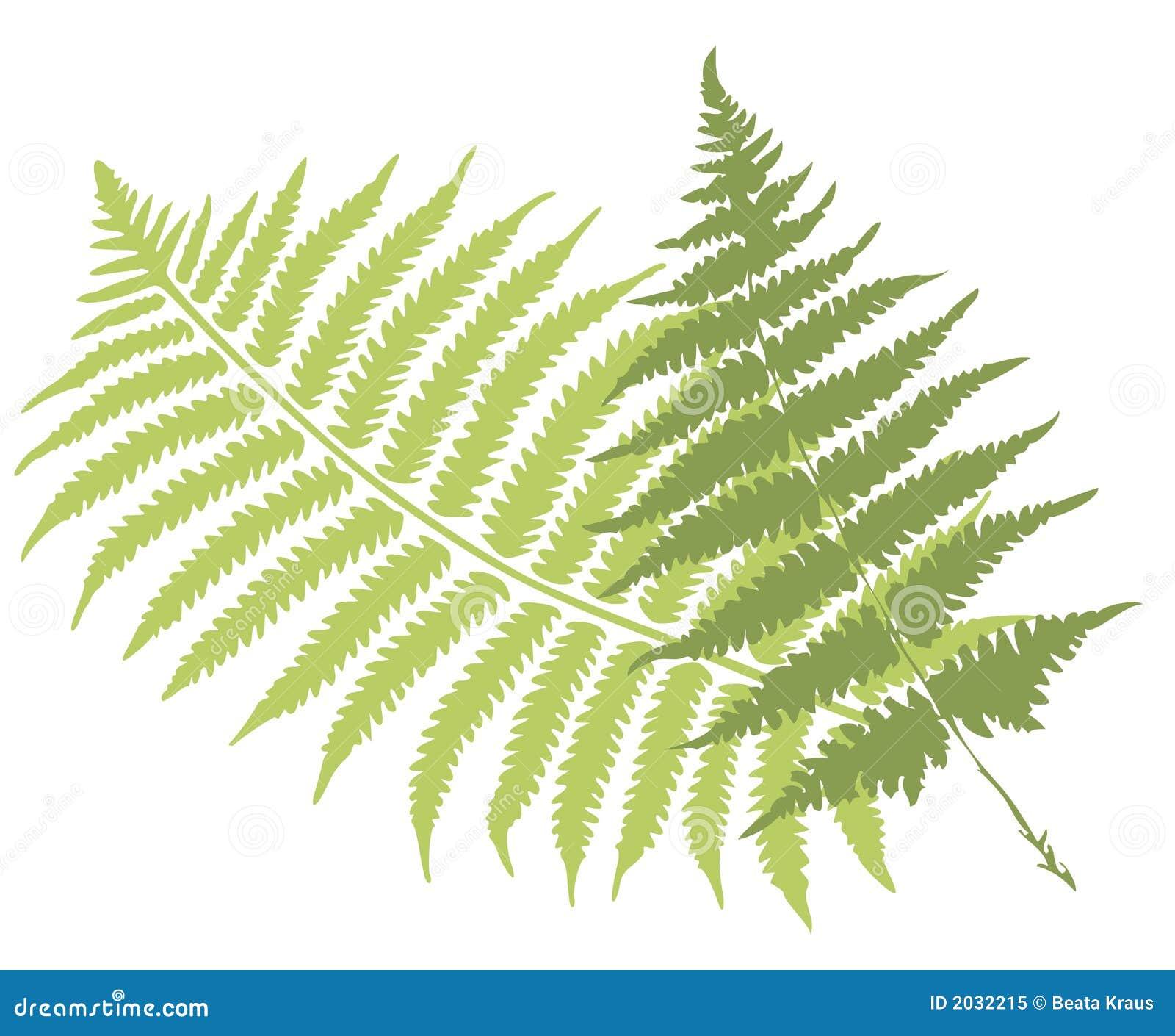 fern leaf clip art � cliparts