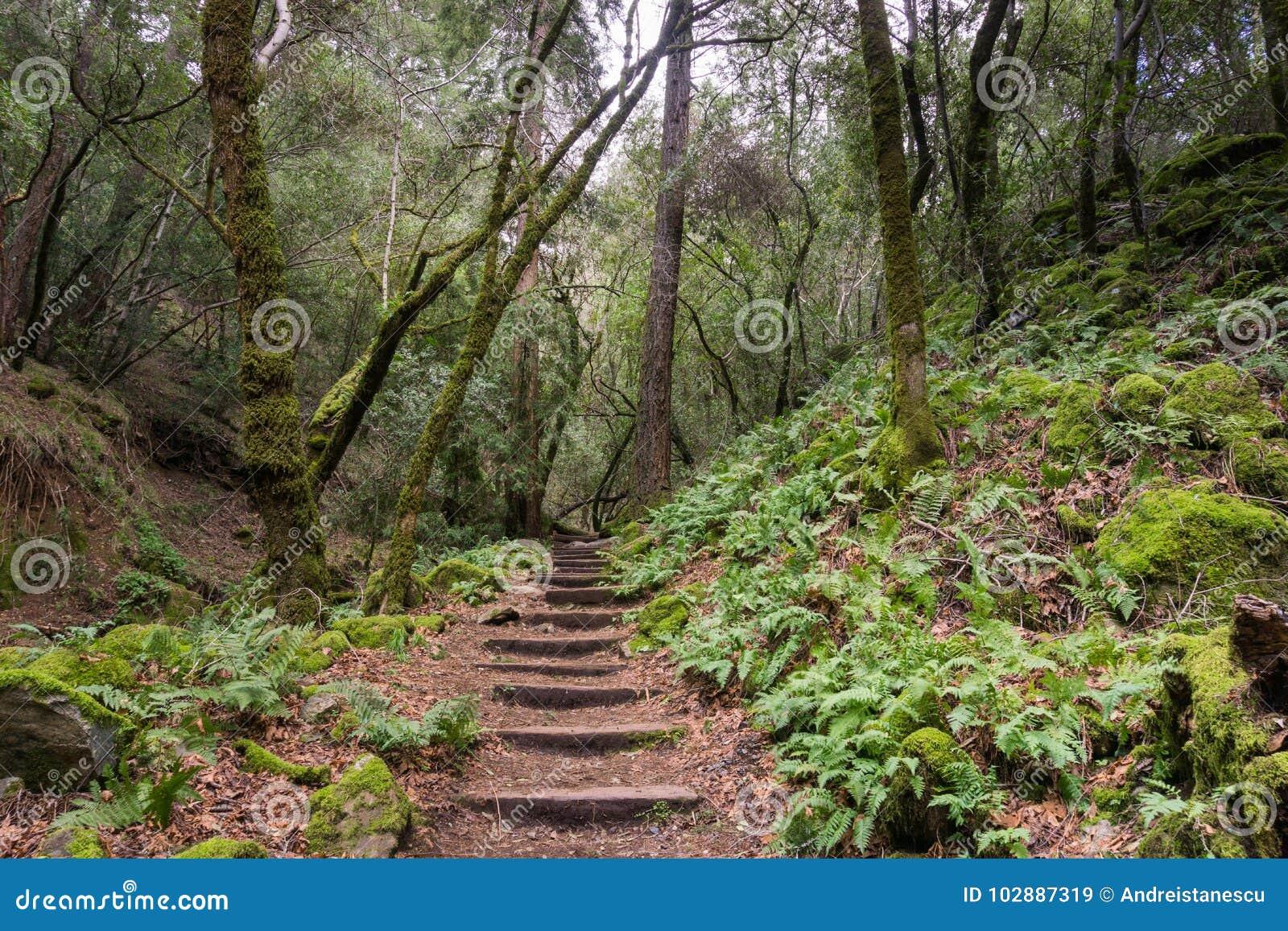 Fern lined hiking trail, Sugarloaf Ridge State Park, Sonoma County, California