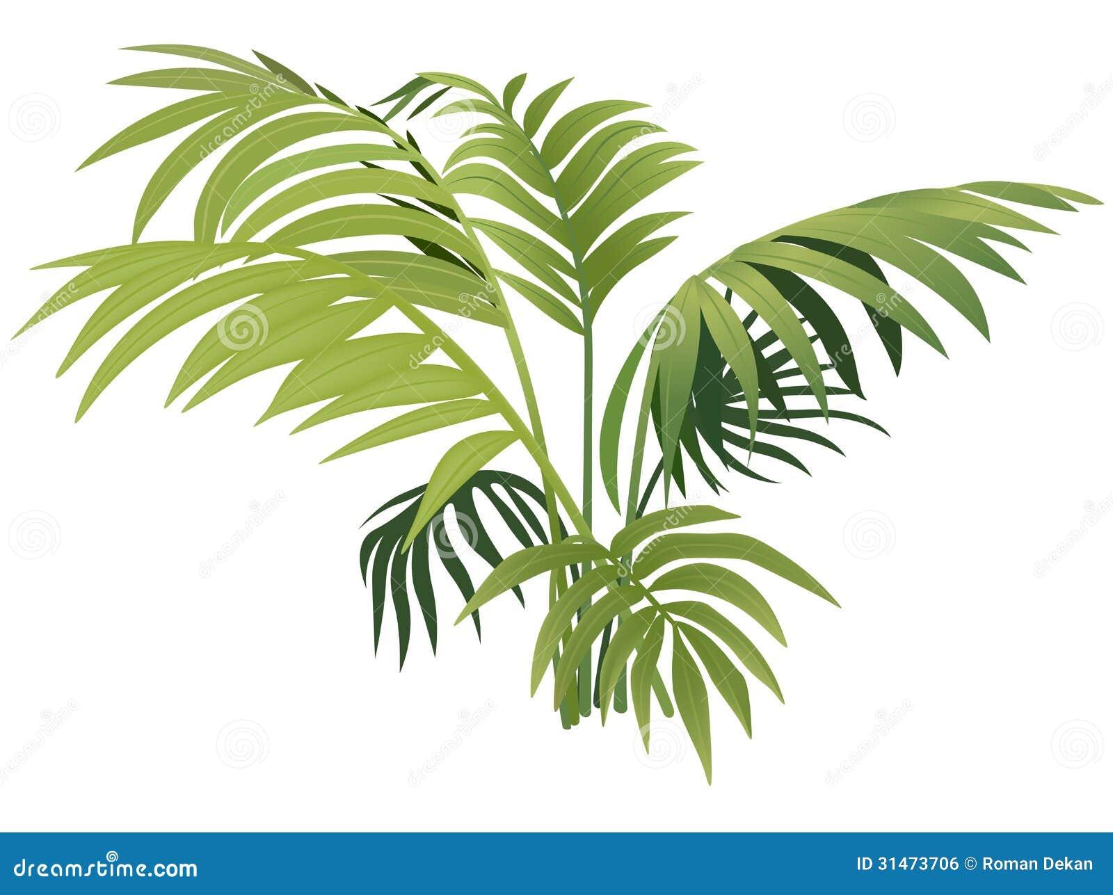 Fern Plant Royalty Free Stock Image - Image: 31473706