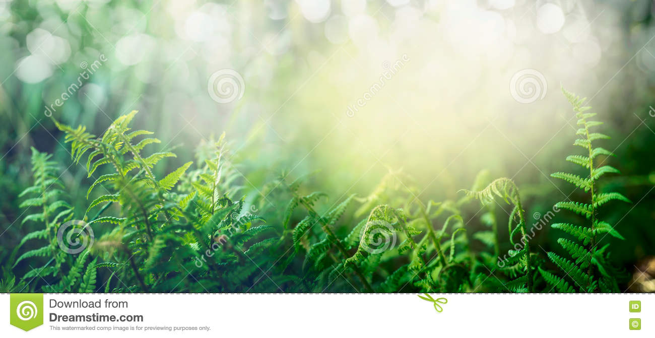 Fern in tropical jungle forest with sun light, outdoor nature background