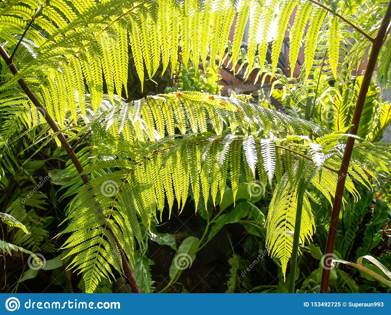 The ferns in the garden with sunlight are sent to the leaves