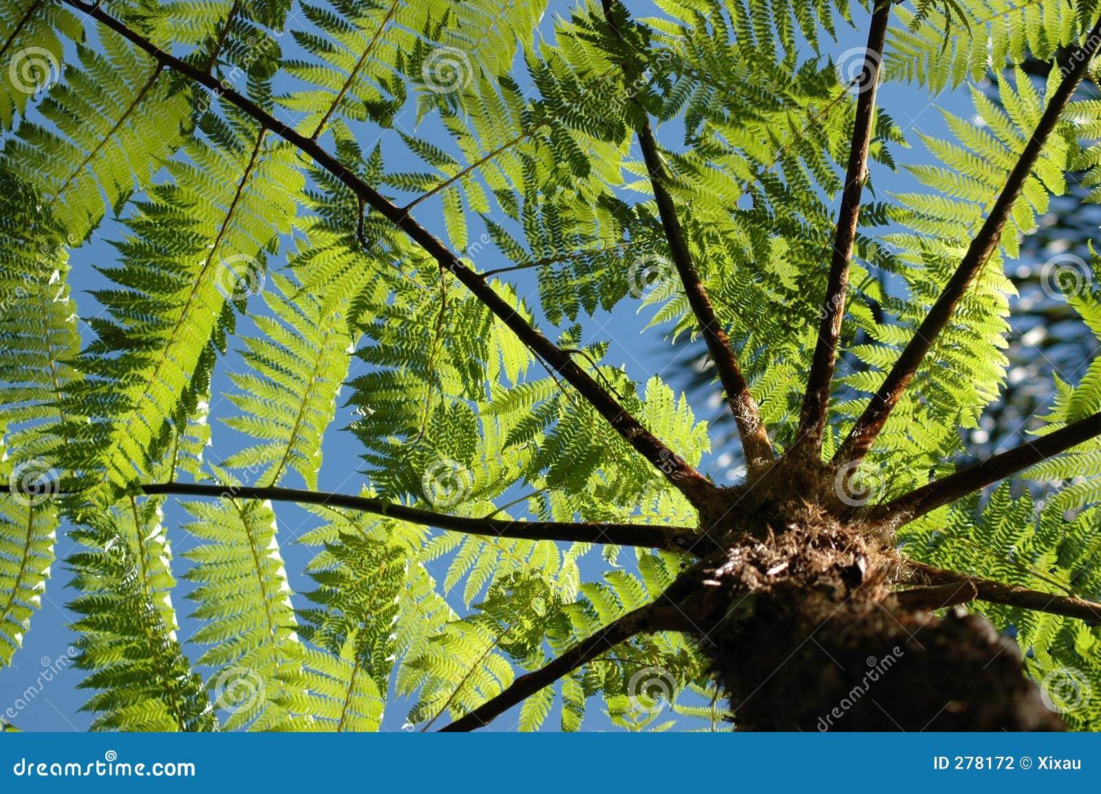 Ferntree
