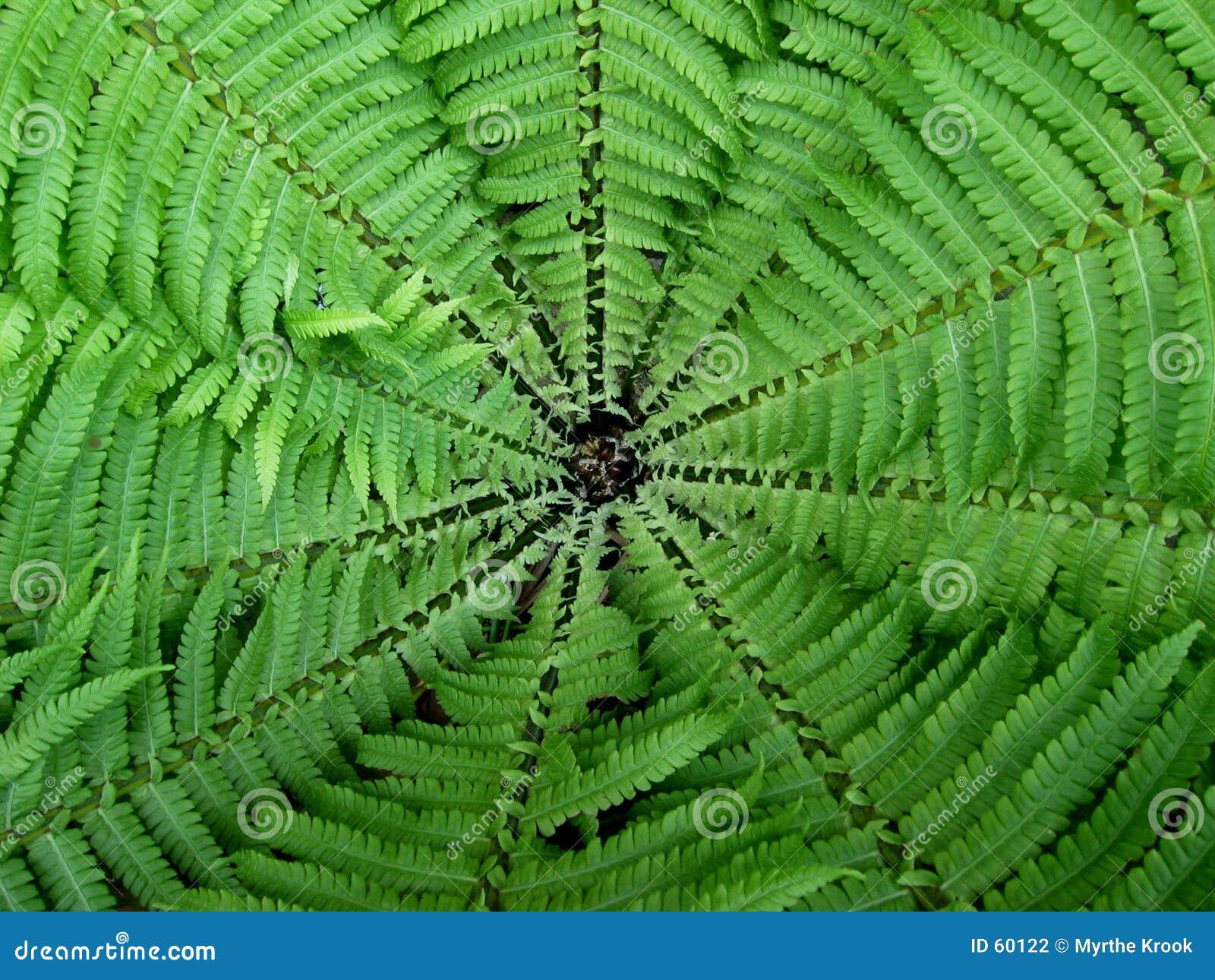 Fernweb