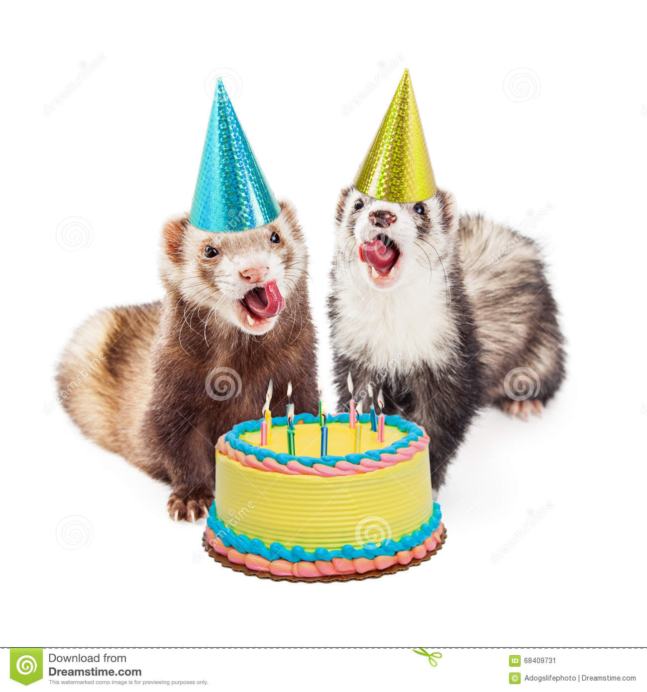 Ferret Birthday Party With Cake Image Image 68409731 – Ferret Birthday Card