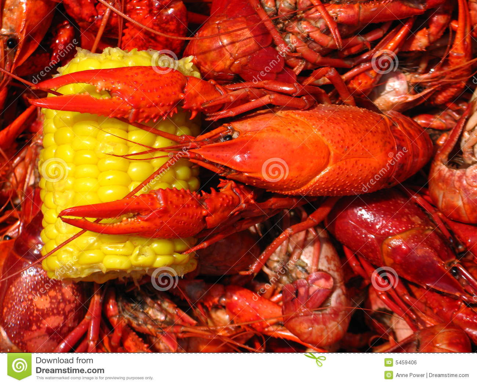 Fervura dos lagostins