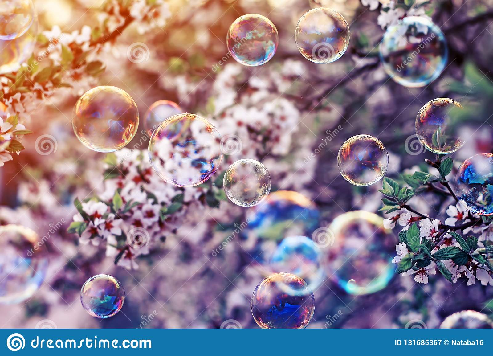 festive background with flying bubbles shimmering in the sun in the spring Sunny garden above the cherry blossom branch