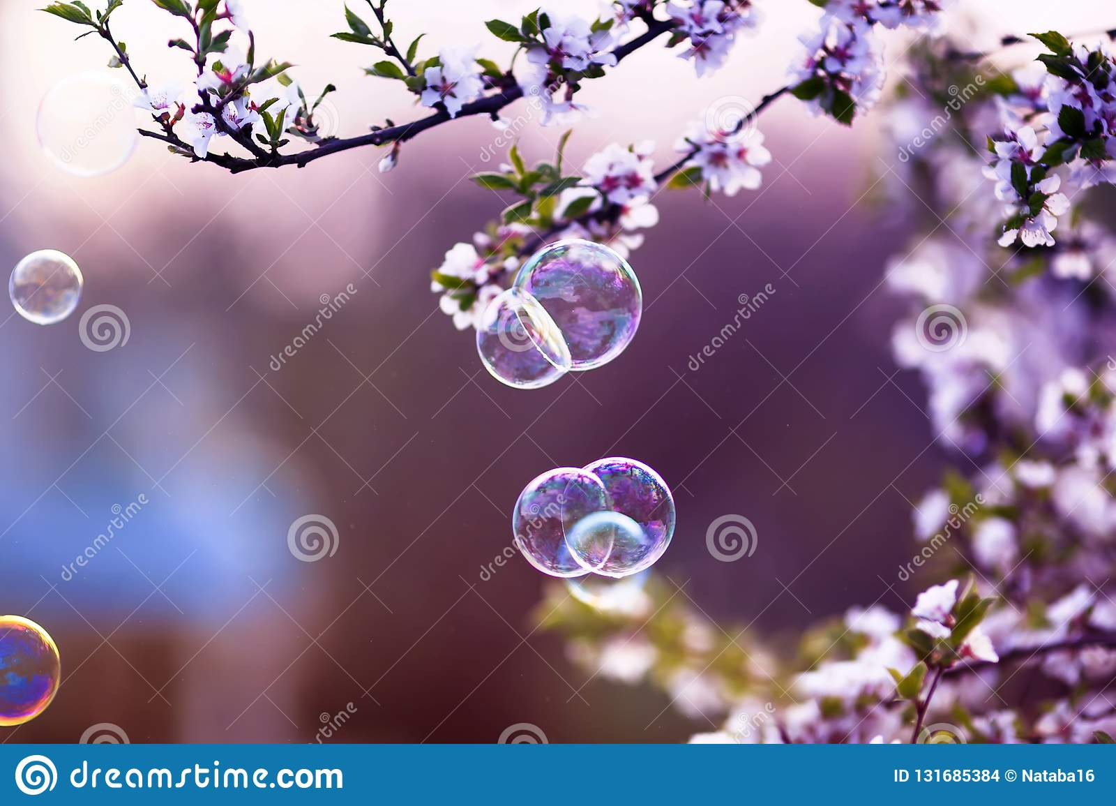 festive background with flying soap bubbles shimmering in the sun in the spring garden above the cherry blossom branch