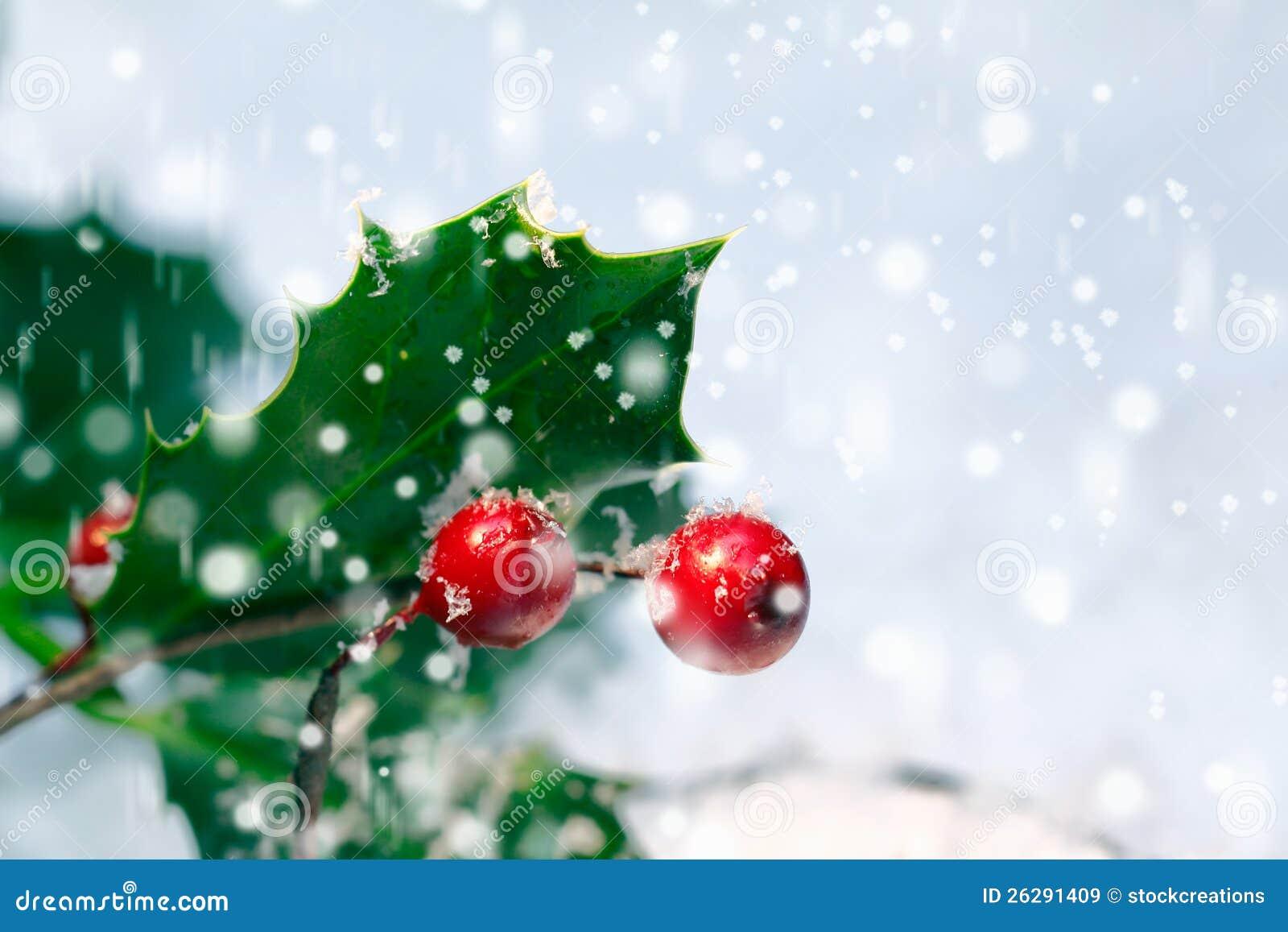 Festive Christmas Holly Background Royalty Free Stock Images - Image ...