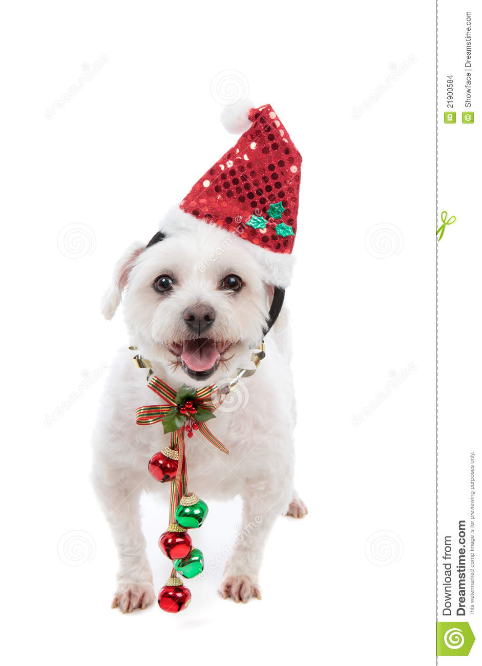 Jingle Bells Dogs And Cats
