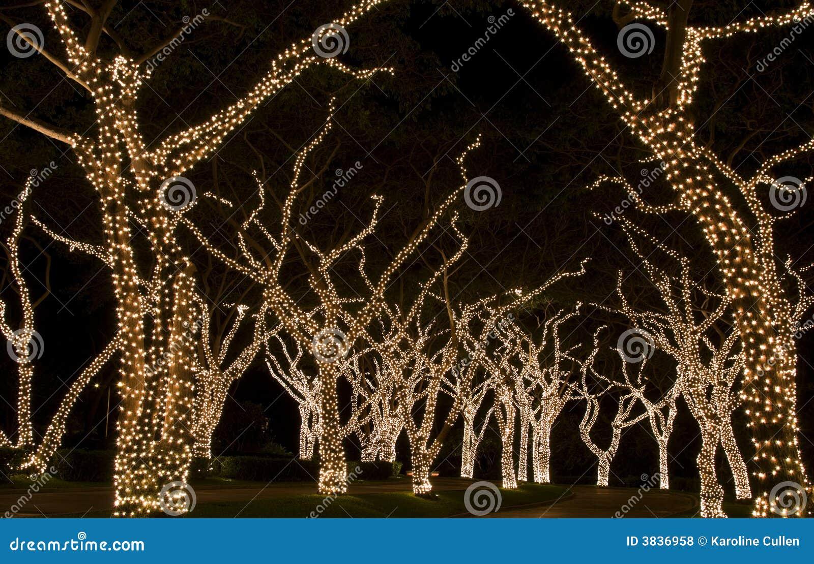 Festive Lights On Trees Royalty Free Stock Photos Image