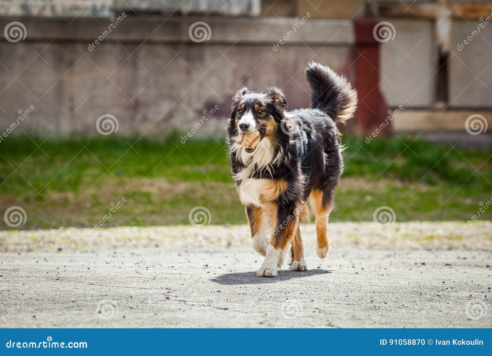 Fetch dog running