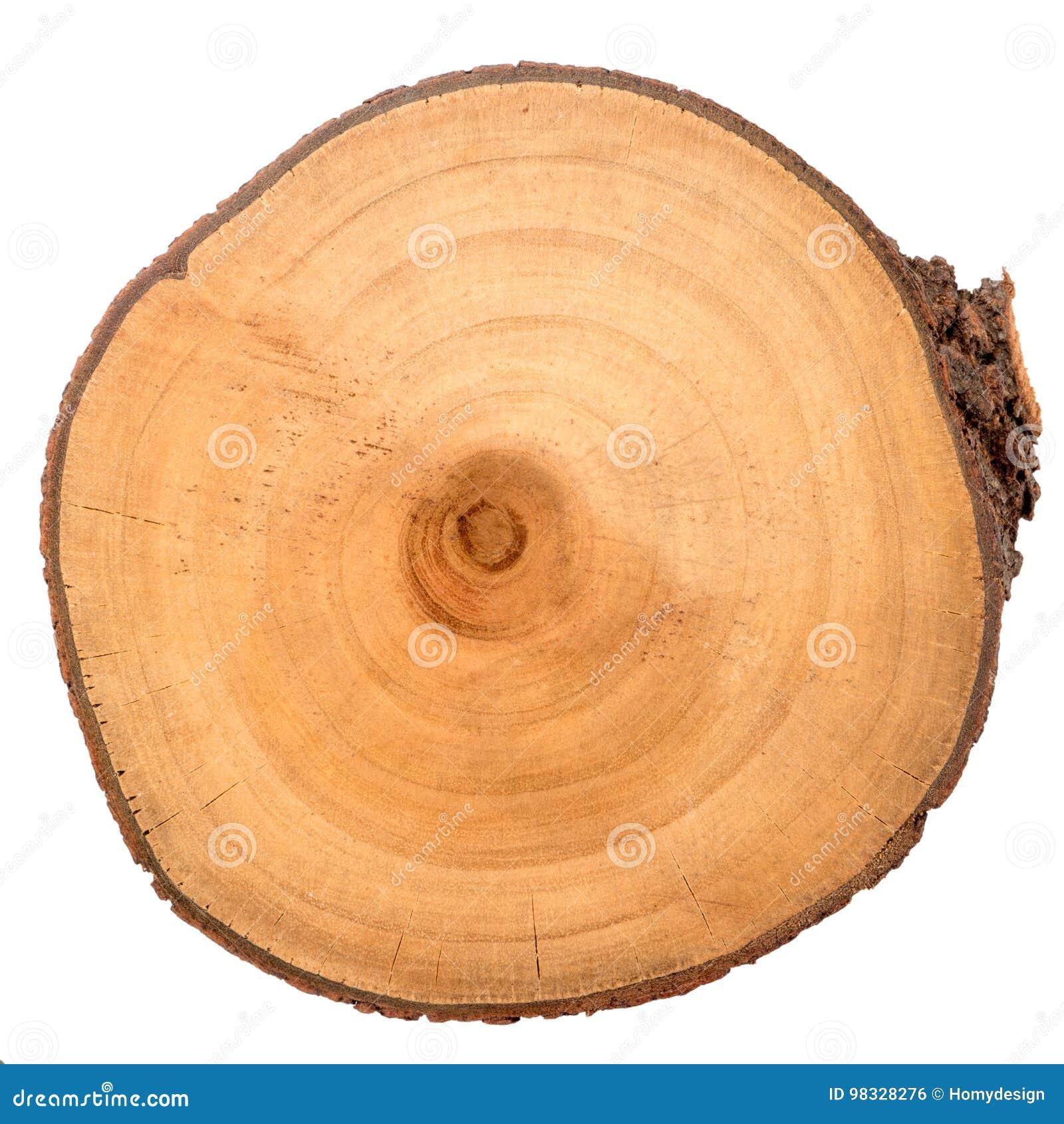 Fetta di legno del ceppo