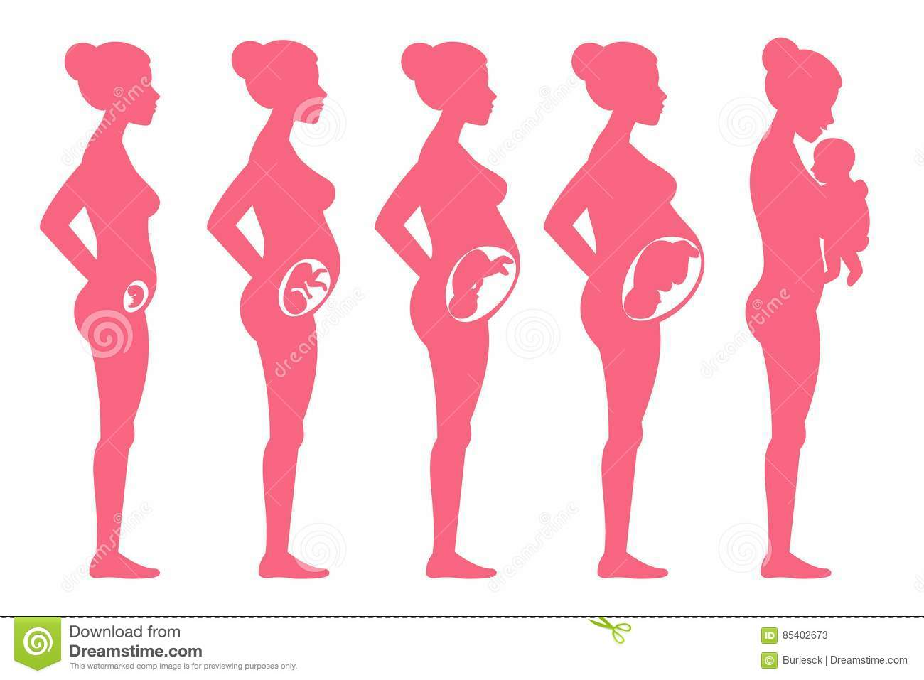Fetus Pregnancy Stages Female Pregnant Staging And Childbirth